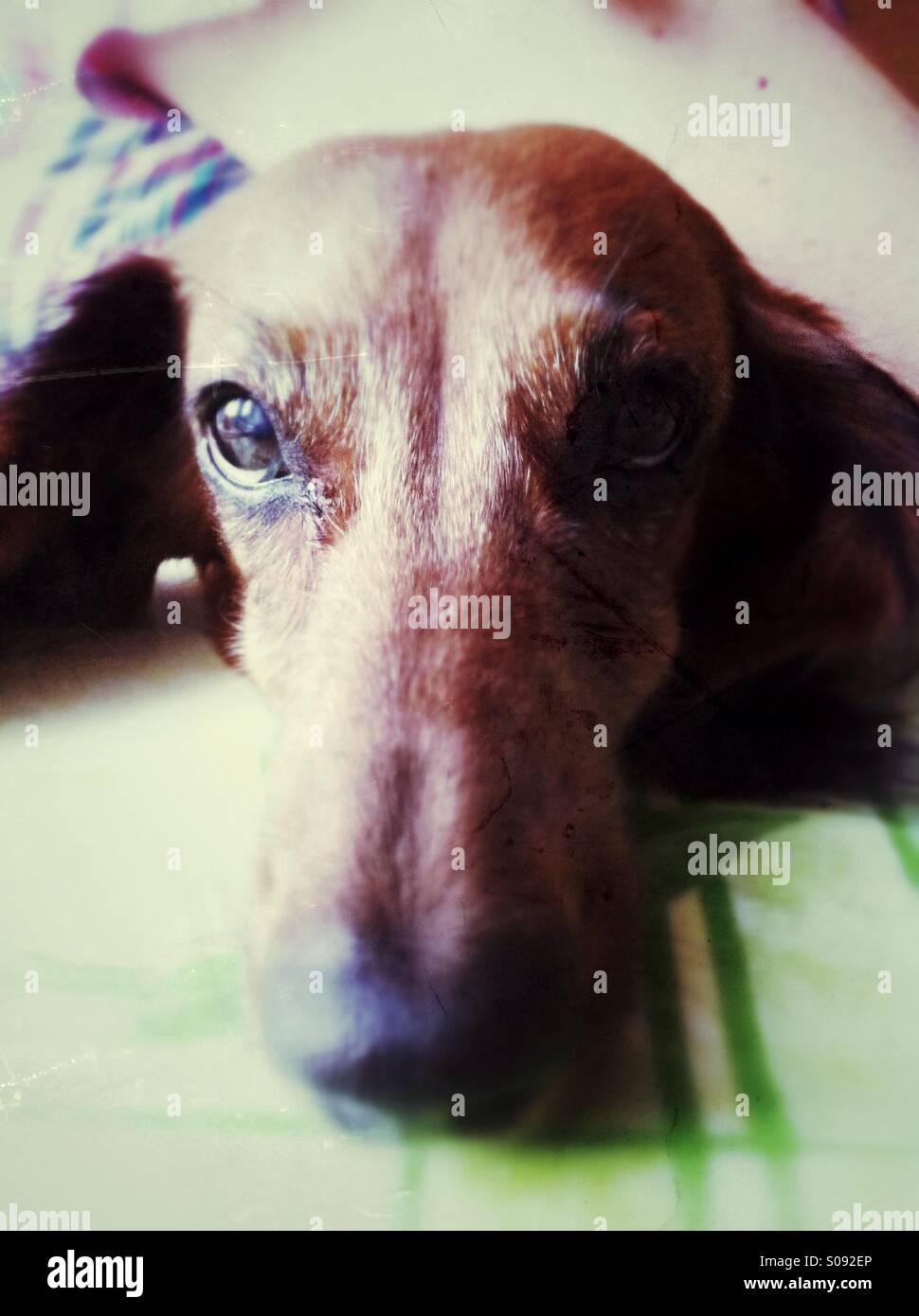 Niedlichen Hund portrait Stockbild