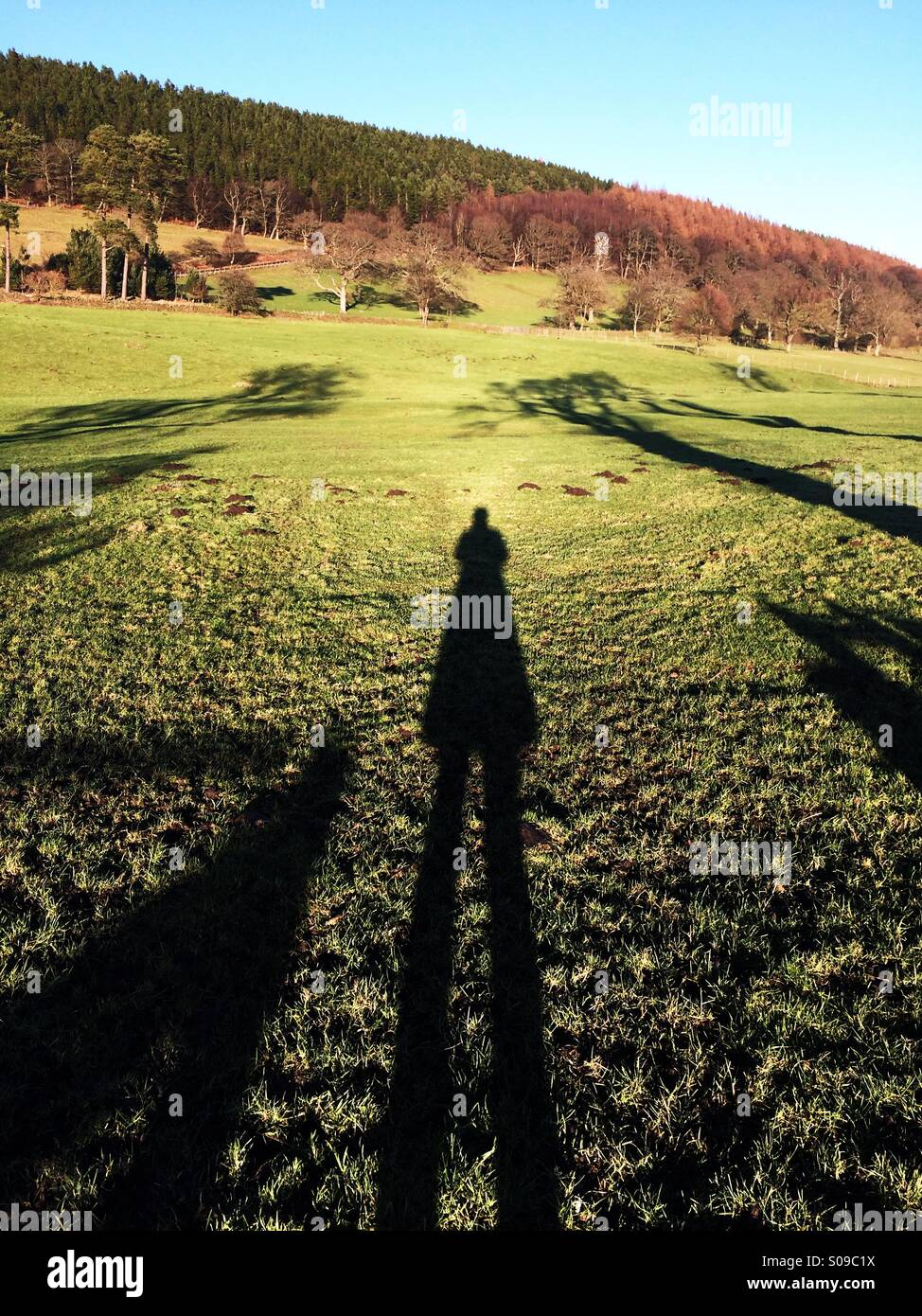 Lange Schatten mit einem Feld und Holz im Hintergrund in England im Winter. Stockbild
