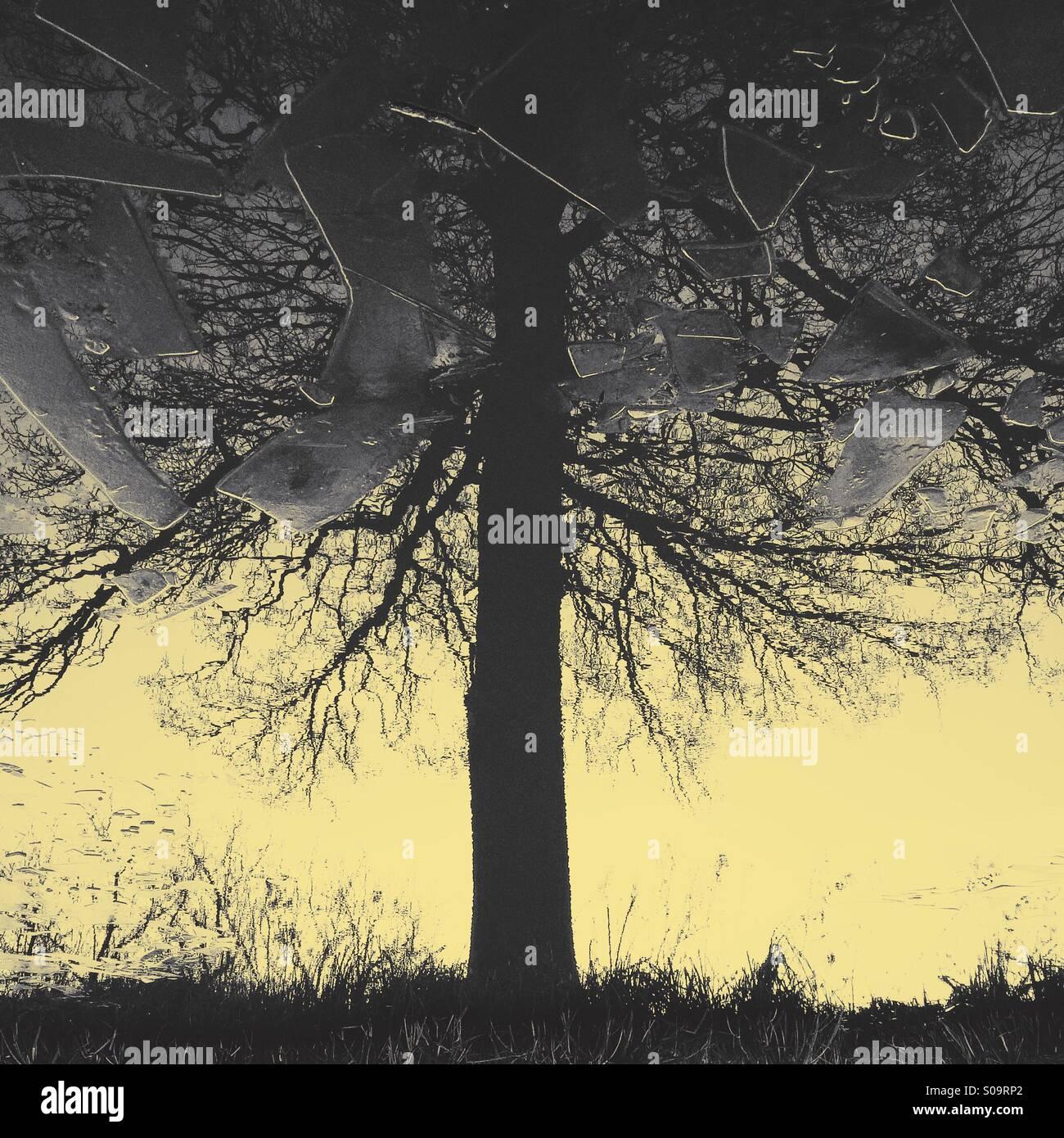 Baum spiegelt sich in eisigen Kanal Stockbild