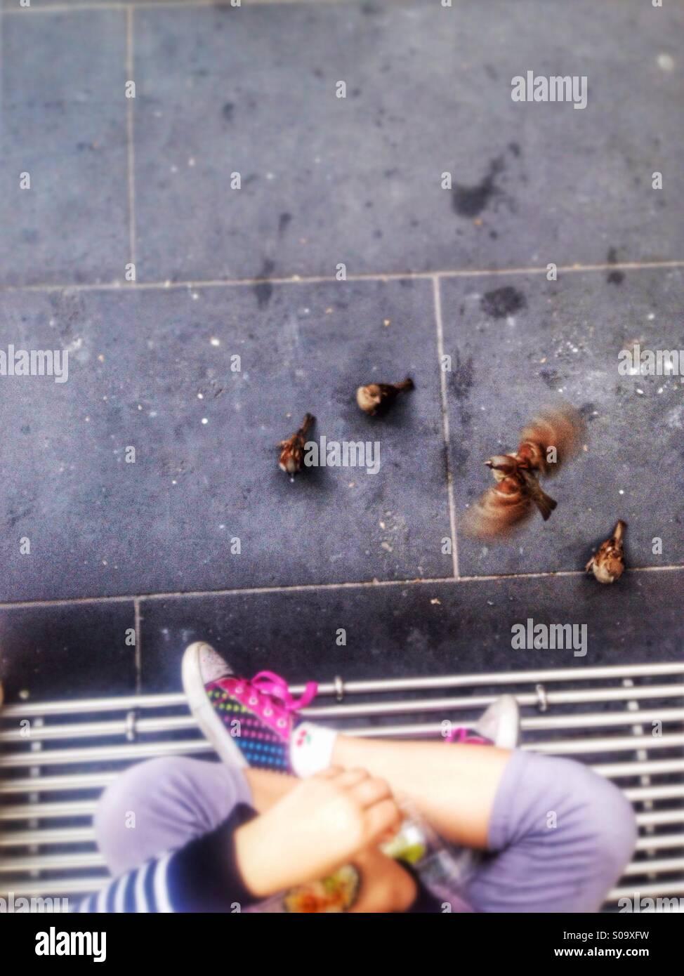 Kleine Mädchen die Vögel zu füttern. Stockbild