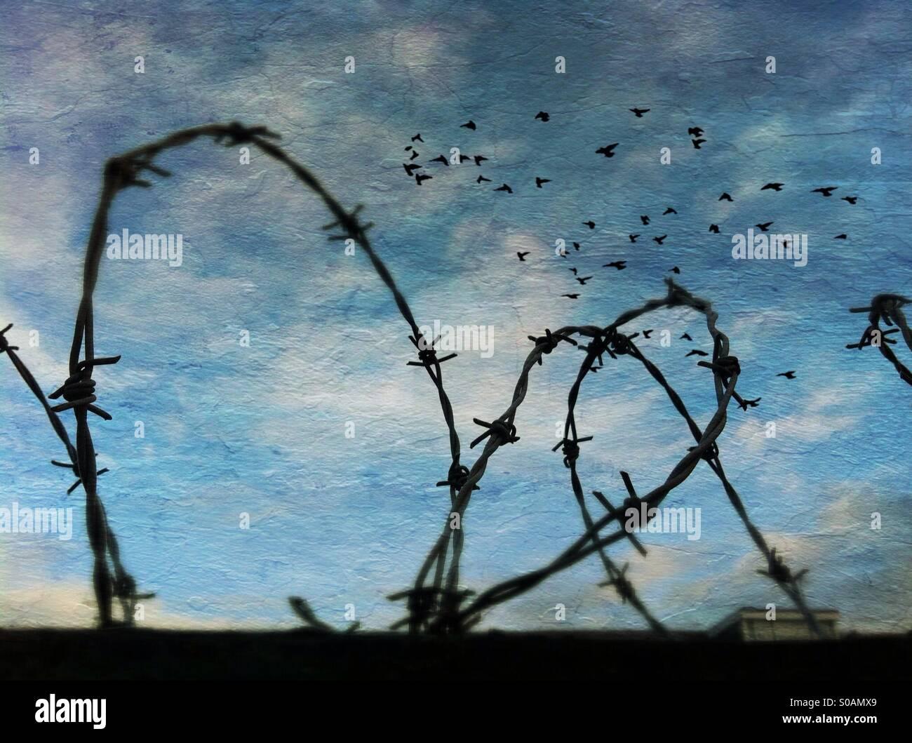 Stacheldraht und Vögel im Flug gegen blauen Himmel. Stockbild