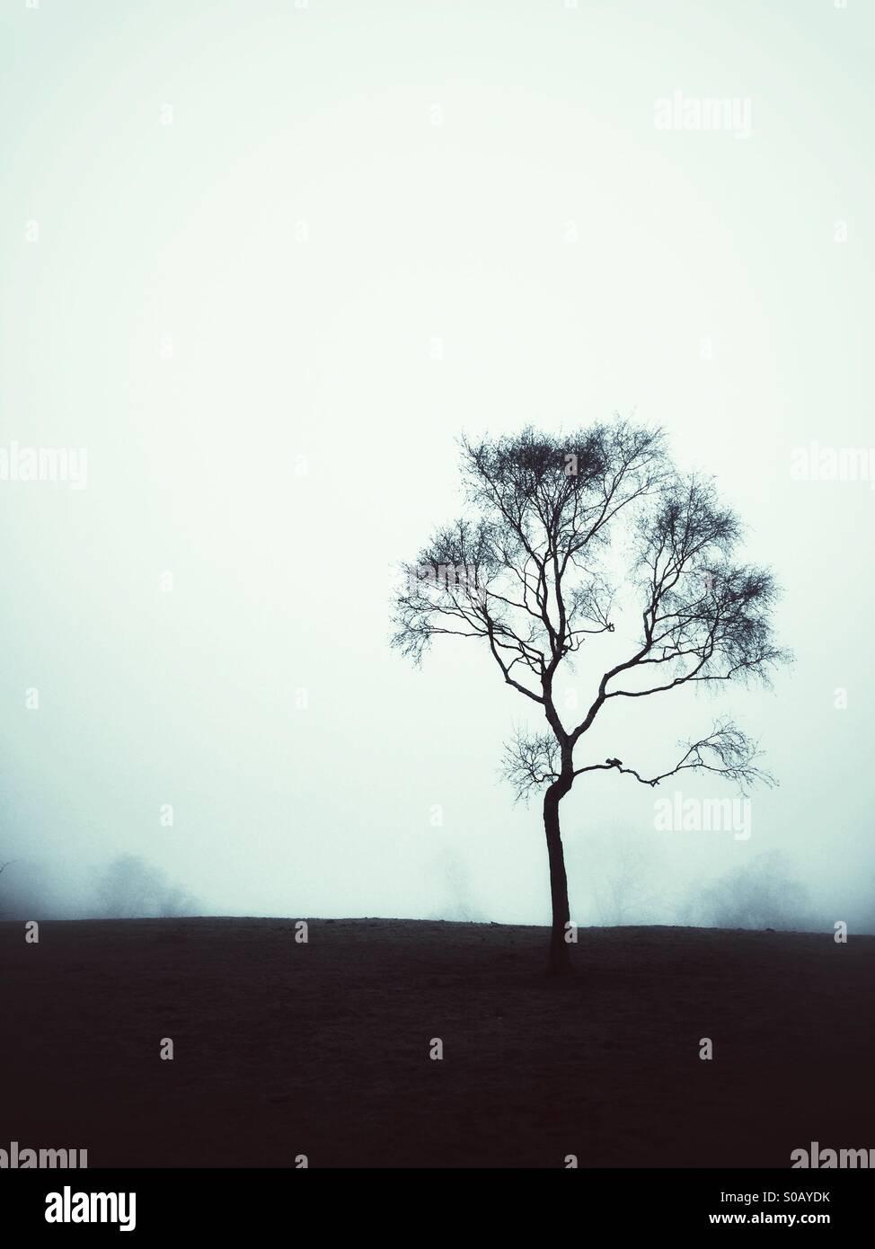 Einzelne Kahler Baum im Feld Stockbild