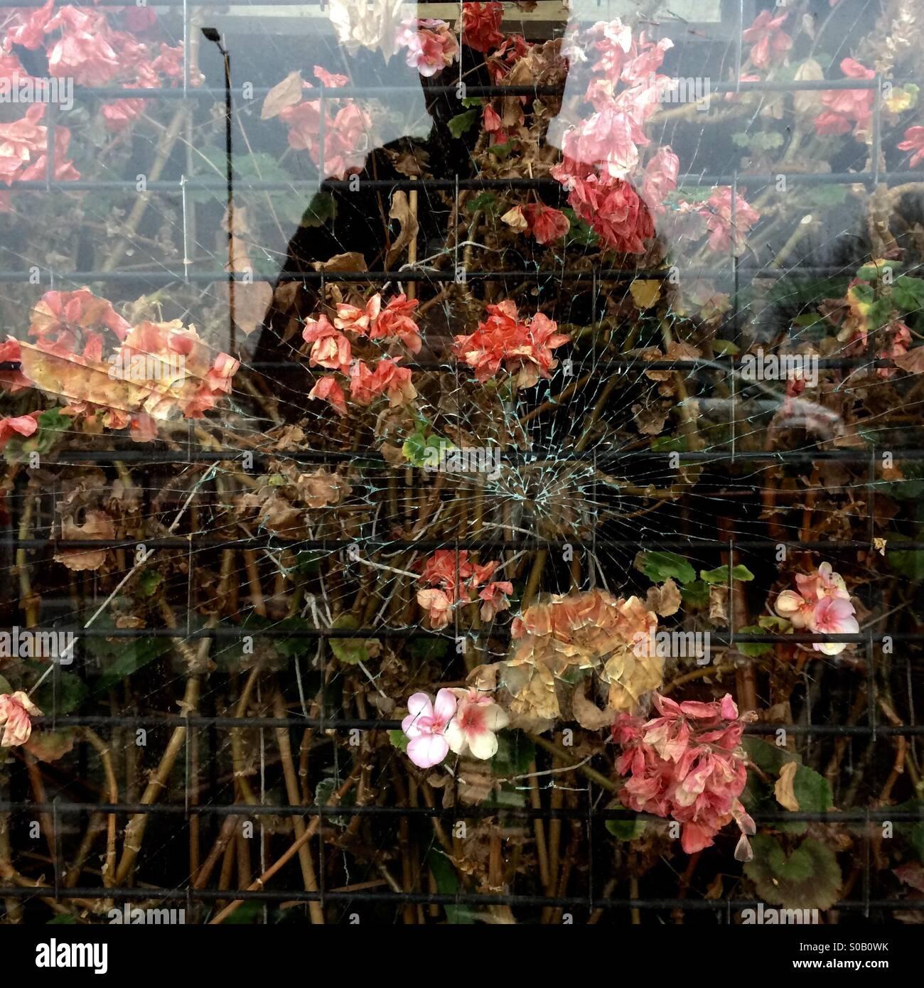 Eine Figur spiegelt sich in der zerbrochenen Fenster von einem stillgelegten Blumenladen in Birmingham, England, Stockbild