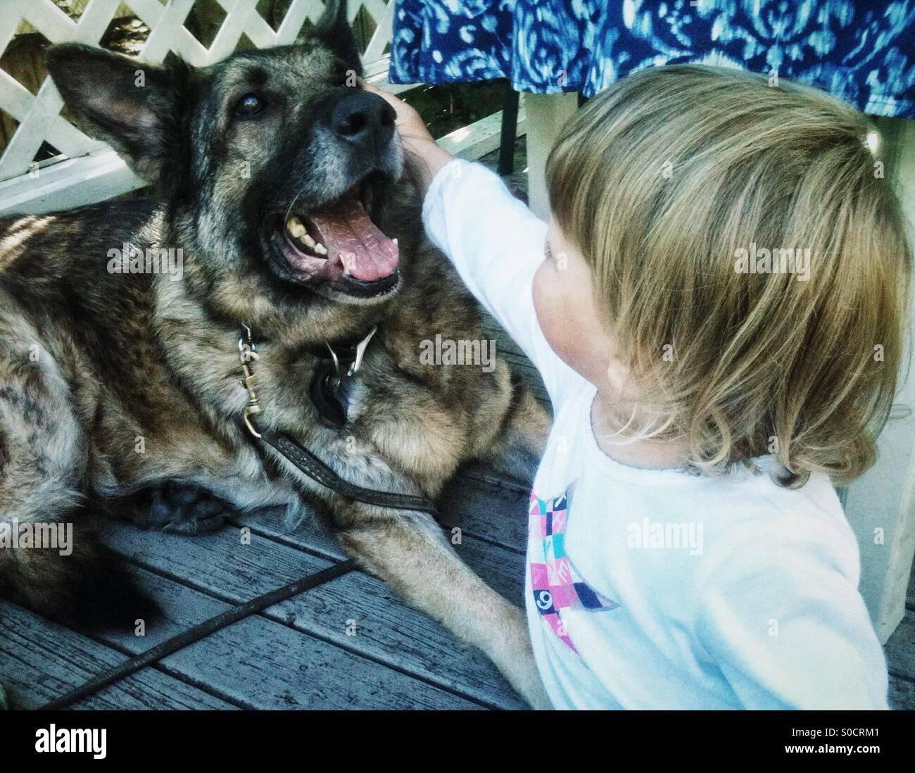 Kleinkind Petting großer deutscher Schäferhund Stockbild