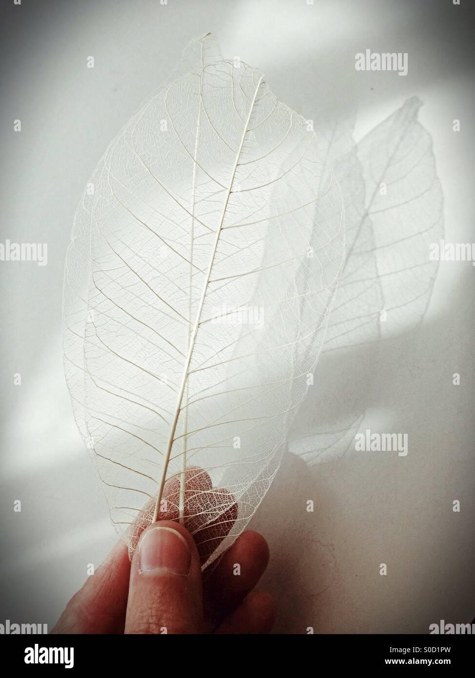 Skeleton-Blätter. Stockfoto