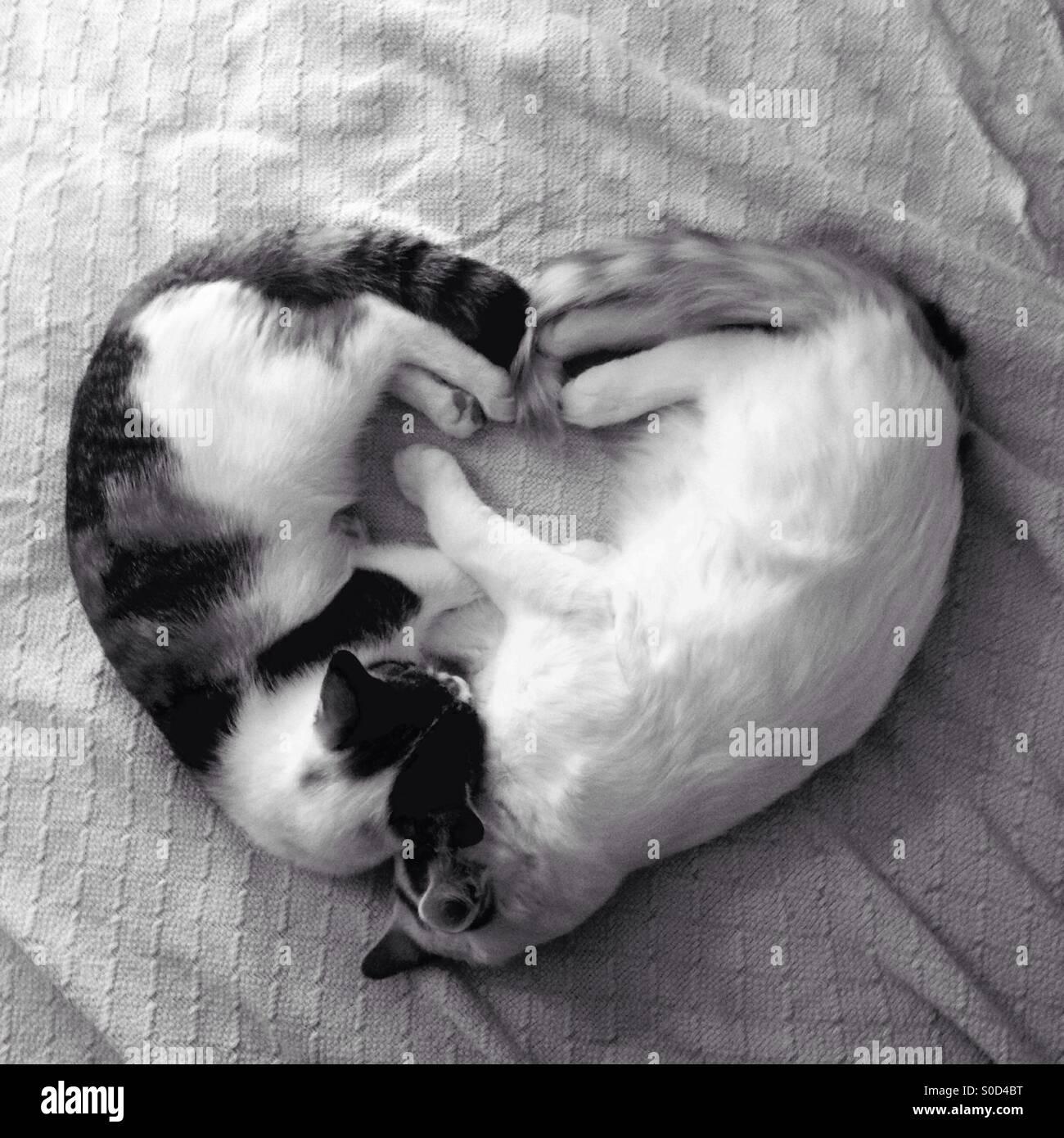 Kätzchen Liebe Stockbild