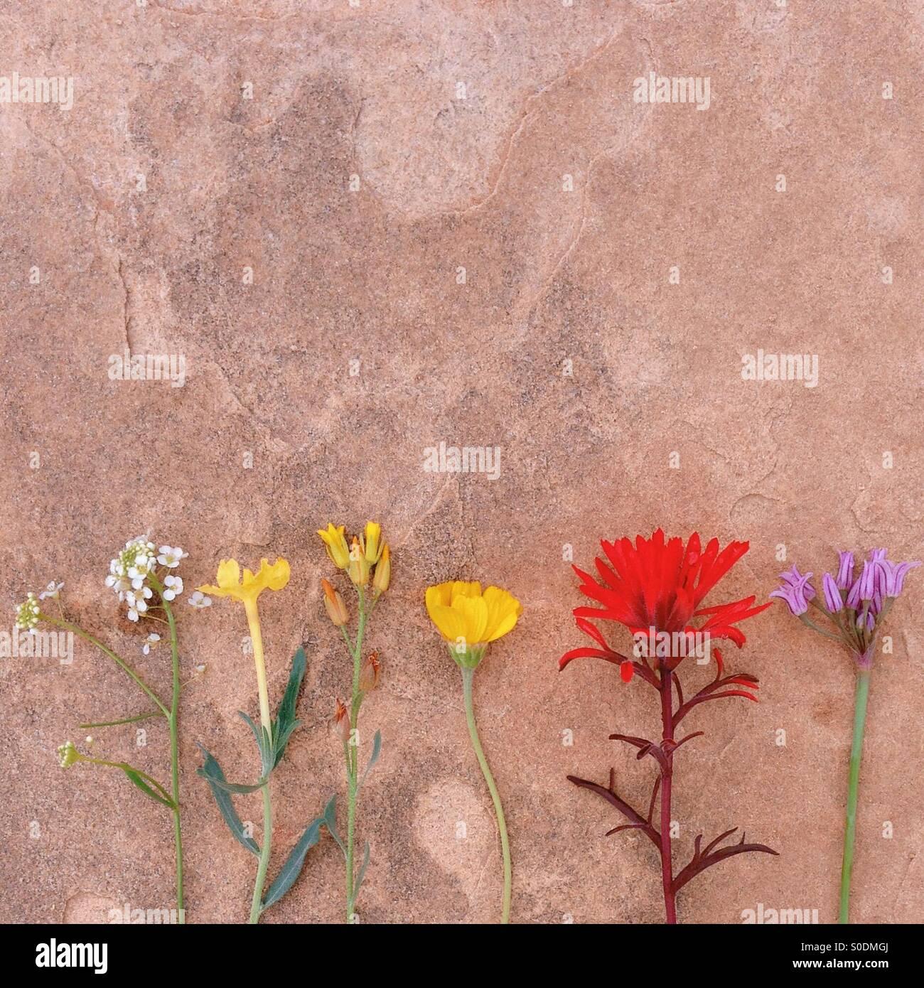 Flora der Wüste Stockbild