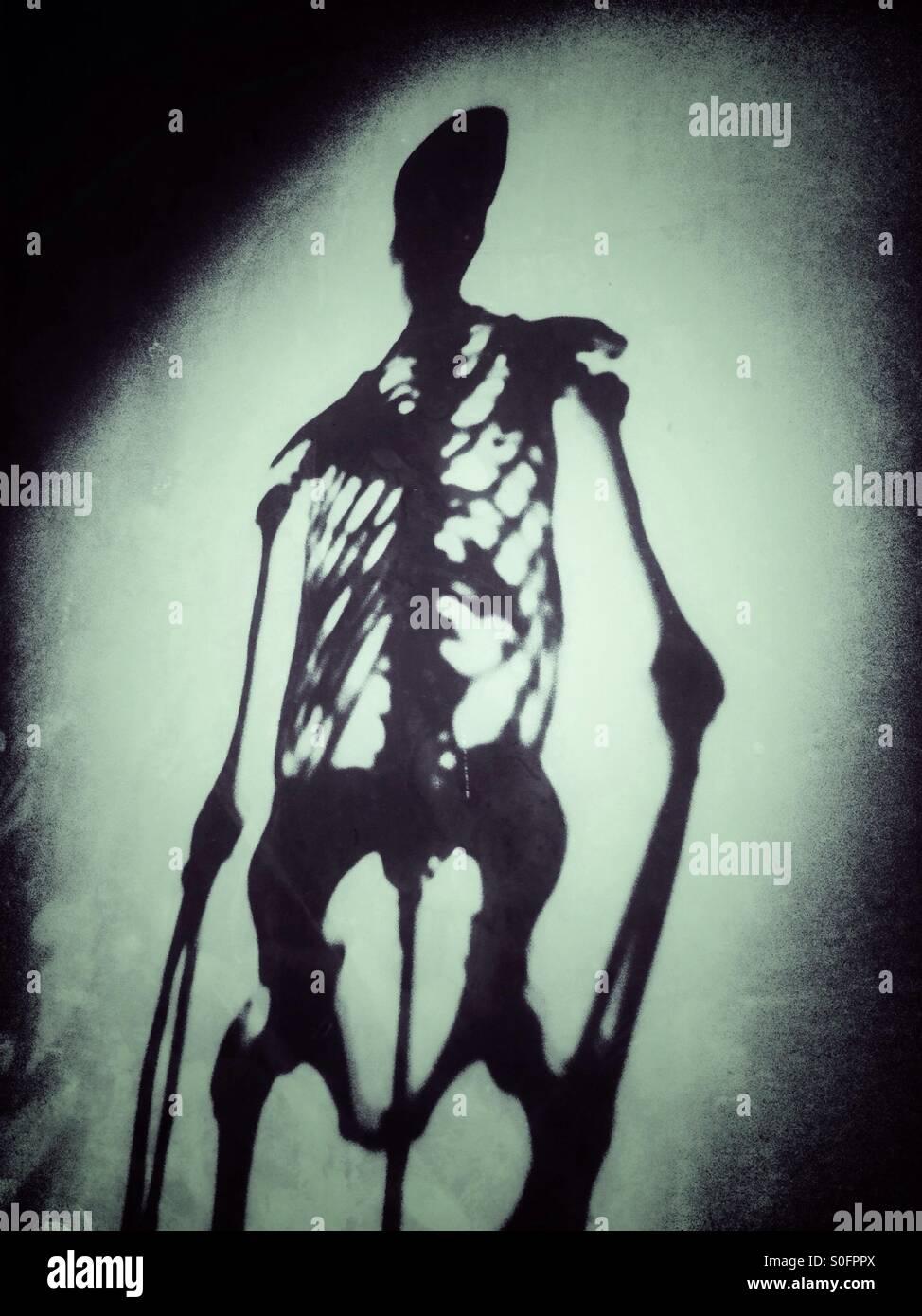 Skelett Stockbild
