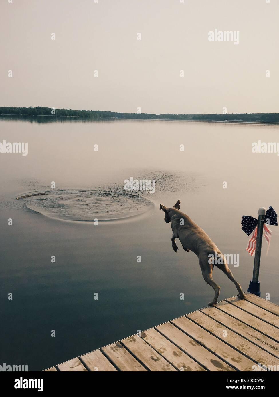 Hund springt in See, um einen Stock zu holen Stockbild