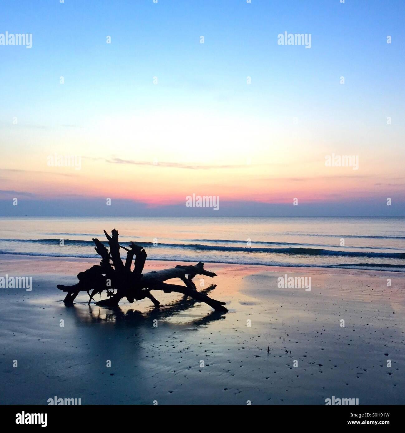 Ein Baumstumpf ist gegen den Sonnenaufgang Himmel auf Jagd Island in South Carolina Silhouette. Stockbild