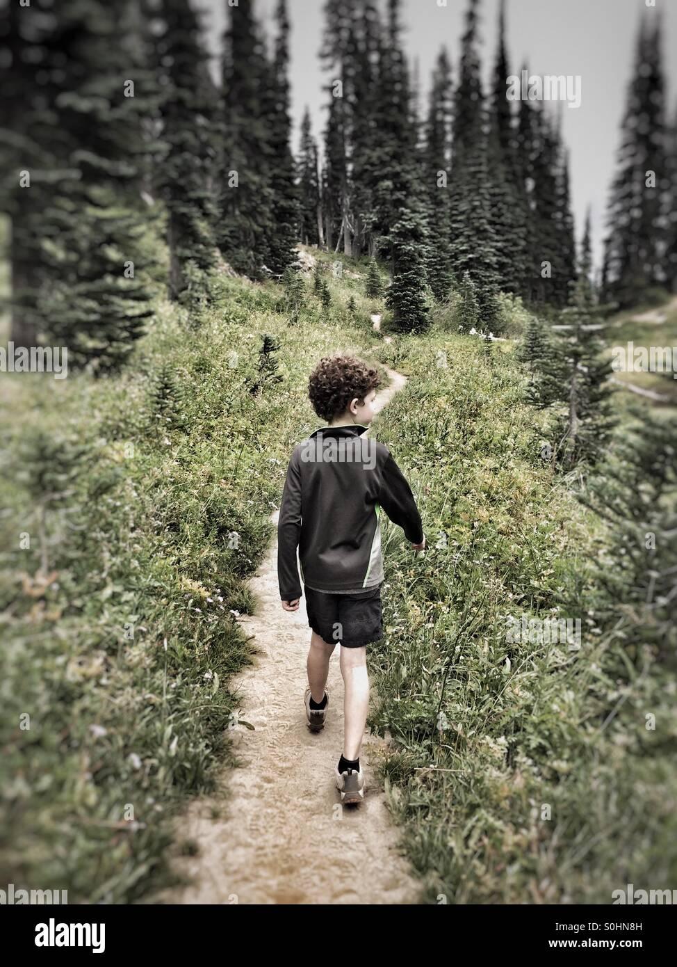 Erkunden den Wald auf dem Pacific Crest Trail in Washington, USA Stockbild