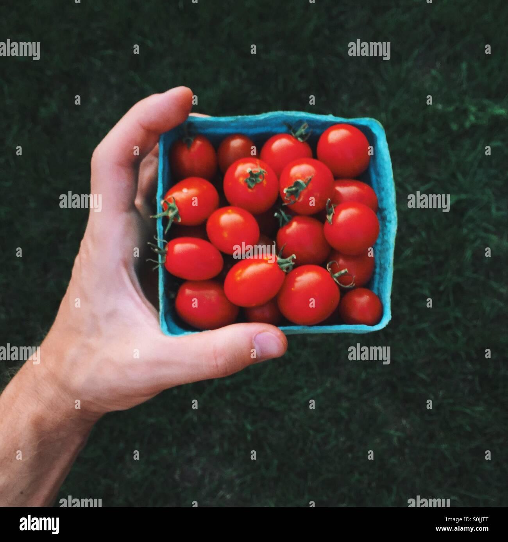 Hand mit roten Tomaten Stockbild