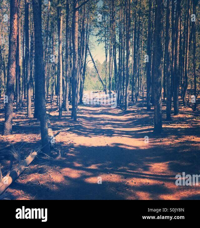 Ein Pfad durch den Wald. Stockbild