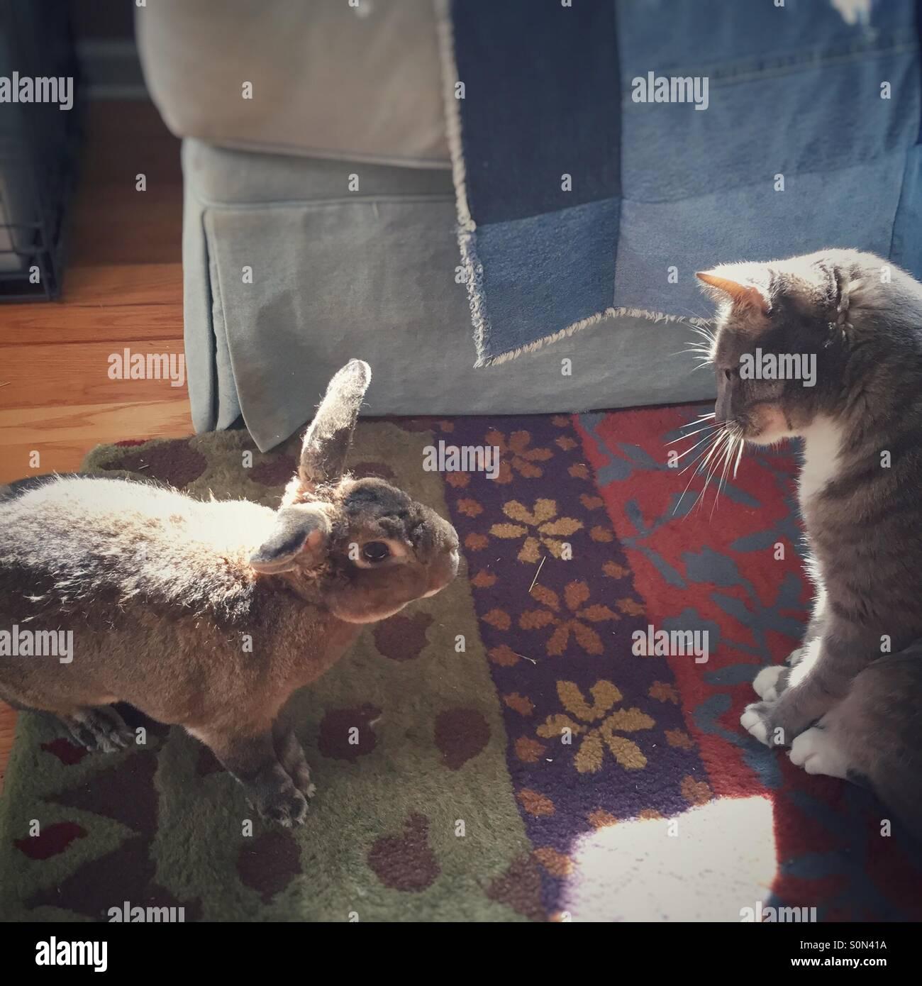 Hase nähert sich vorsichtig Katze. Stockbild