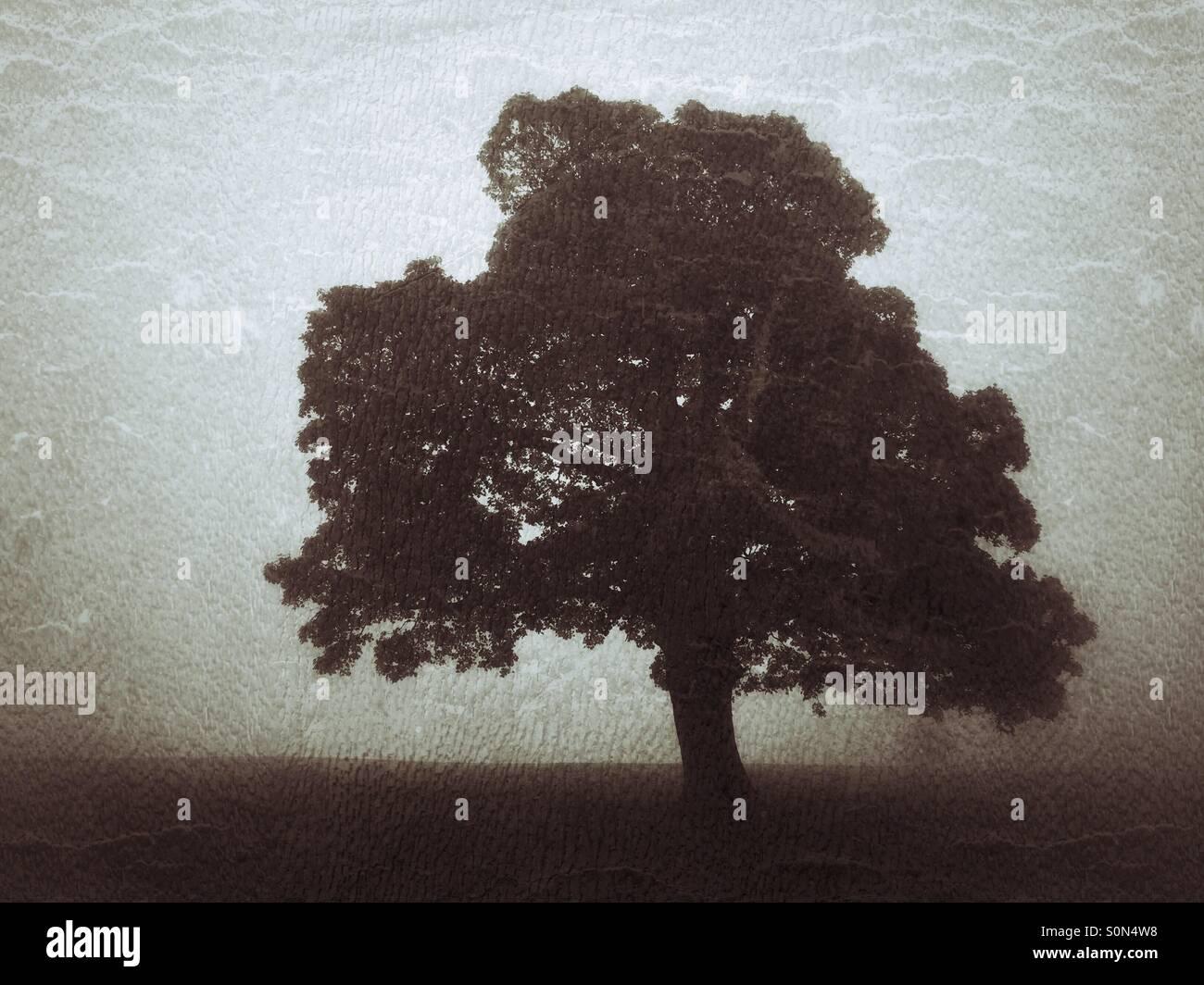 Einsamer Baum im Nebel Feld Stockbild
