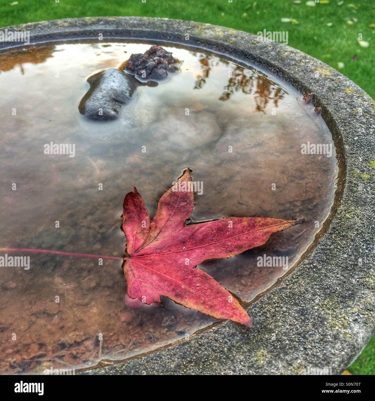 Roter Herbst Blatt im Wasser gefüllt Vogelbad zeigt Reflexionen auf der Wasseroberfläche Stockbild
