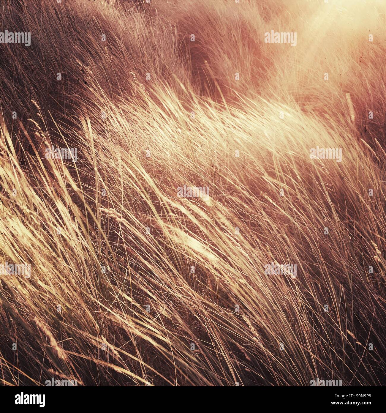 Sonnenschein auf Sanddünen Stockbild