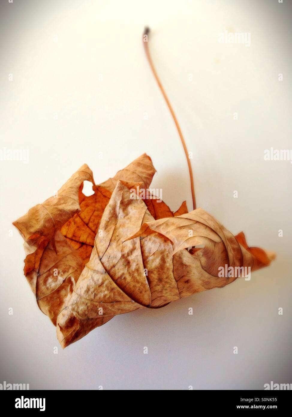 Trockene, abgestorbene Blätter. Stockbild