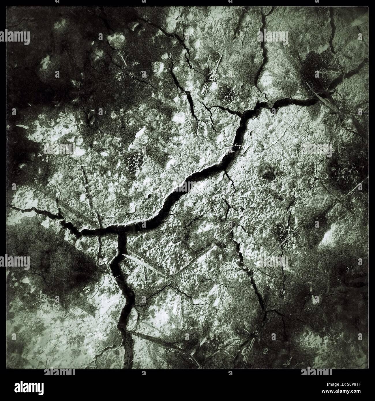 Neues Leben nach der Dürre, Katalonien, Spanien. Stockbild