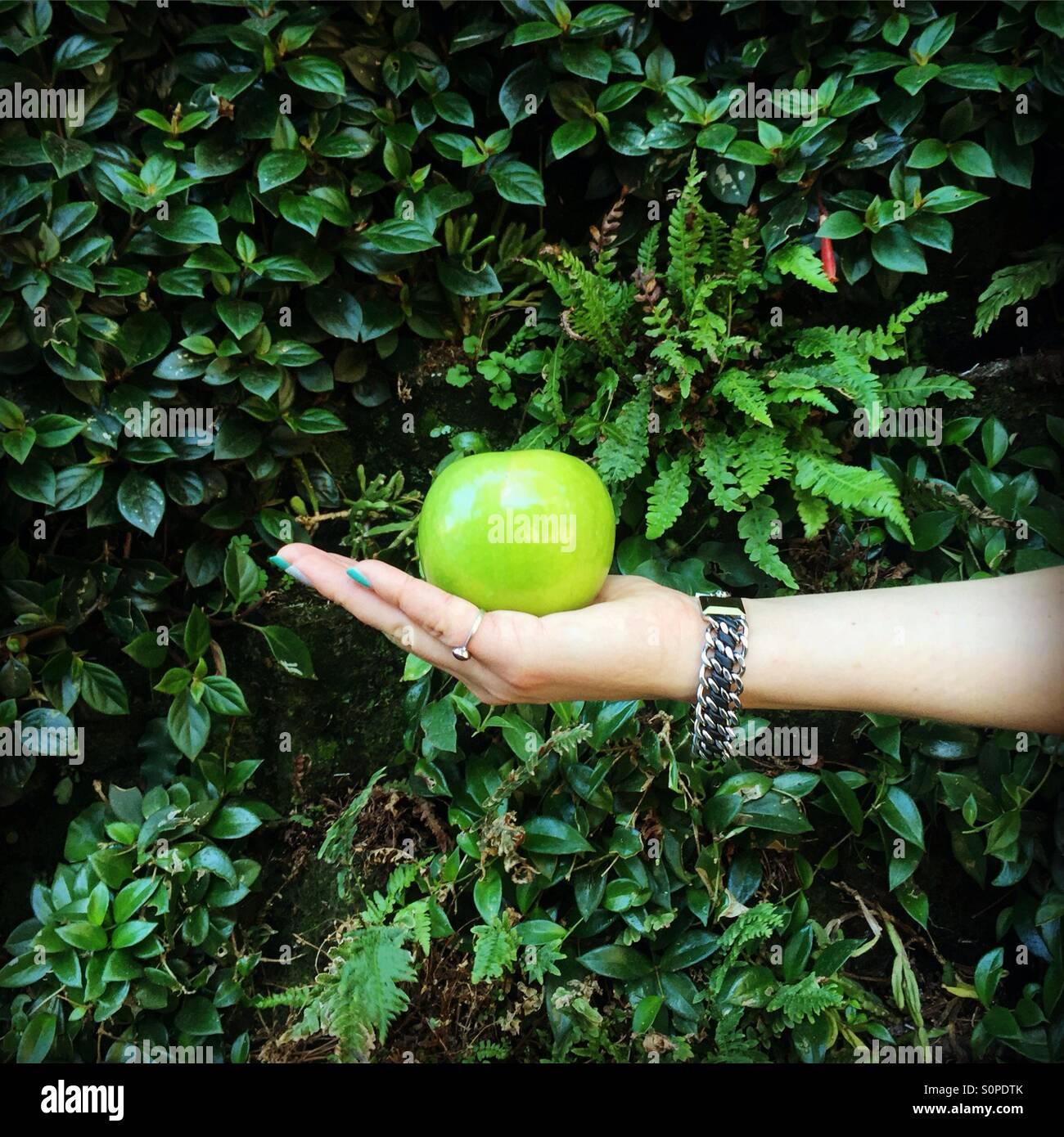 Grüner Apfel auf die Hand mit der Handfläche eines Mädchens mit dem lebendigen Hintergrund Wand Stockbild