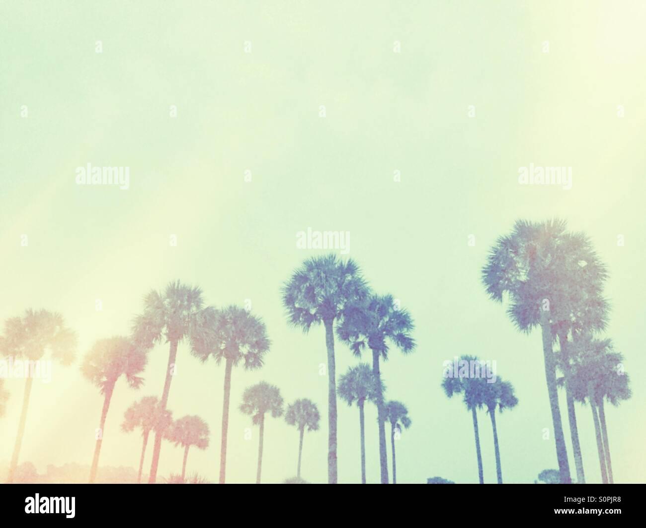 Ausrichten von Palmeadow Bäumen vor einem grauen Himmel South Carolina. Stockbild