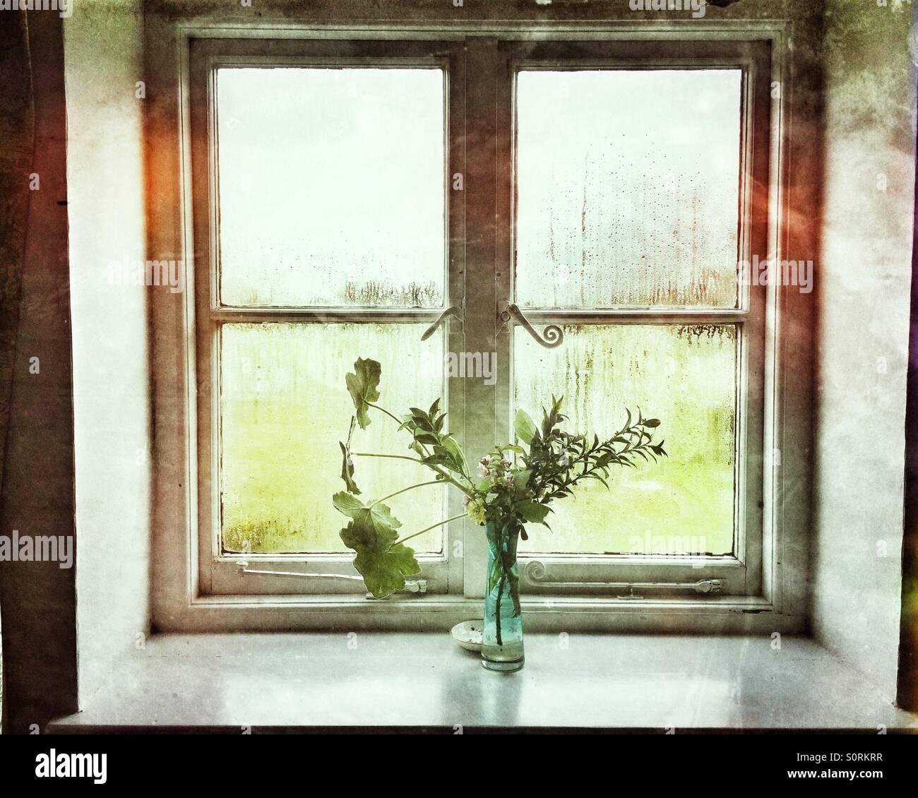 Eine Vase mit Blumen am Fenster Stockbild