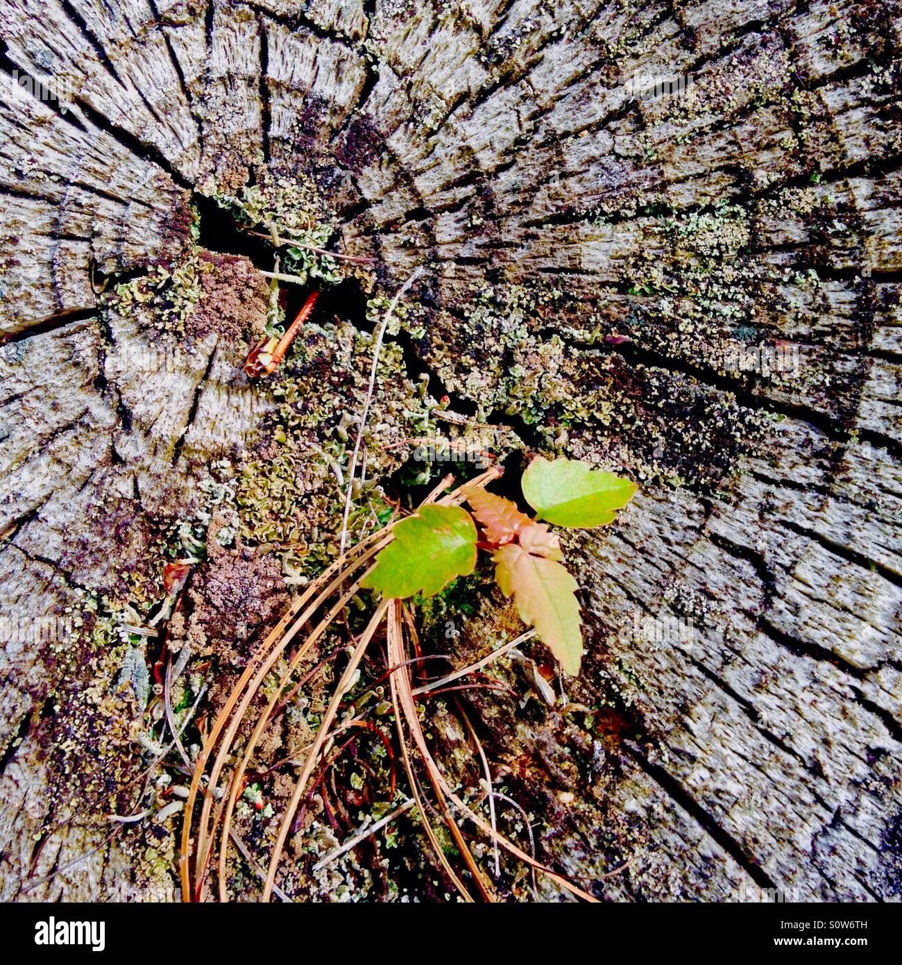 Still stockfotos bilder alamy