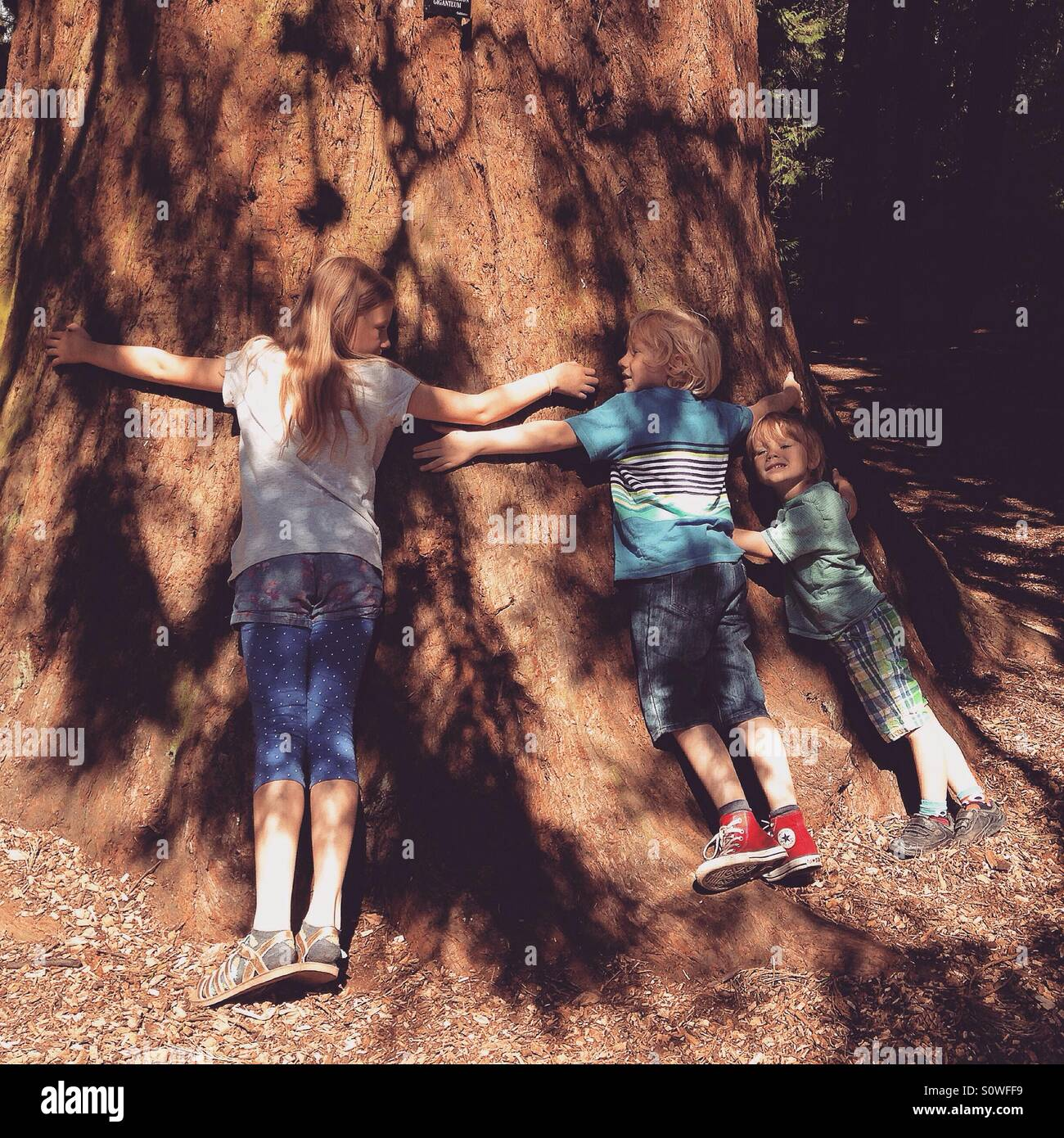 Kinder, die einen Baum umarmen Stockbild
