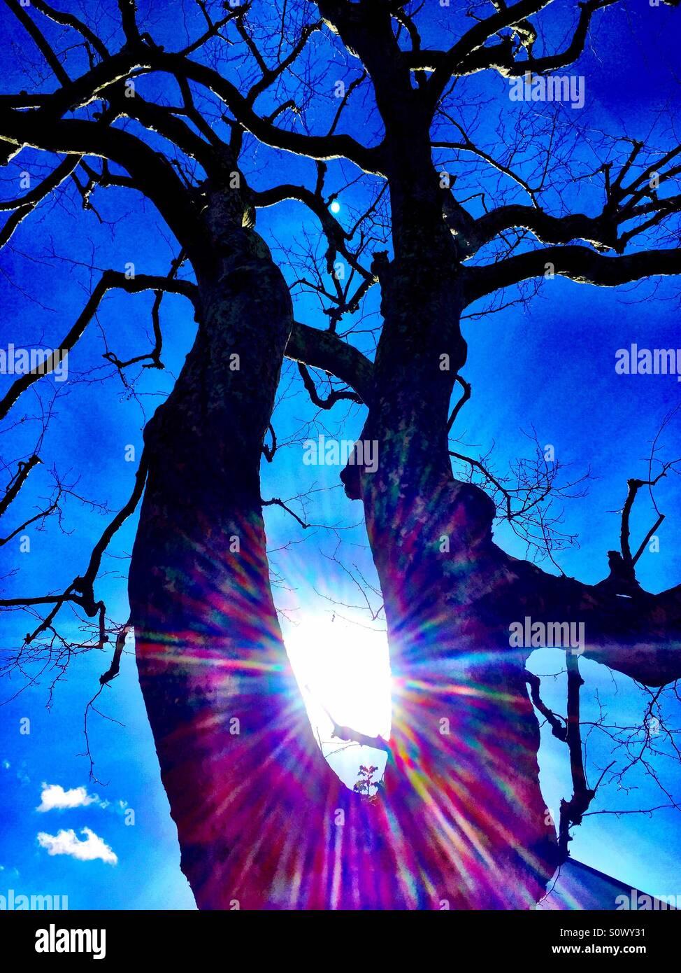 Baum mit keine Blätter zurück beleuchteten Silhouette mit Flair-Effekt Stockbild