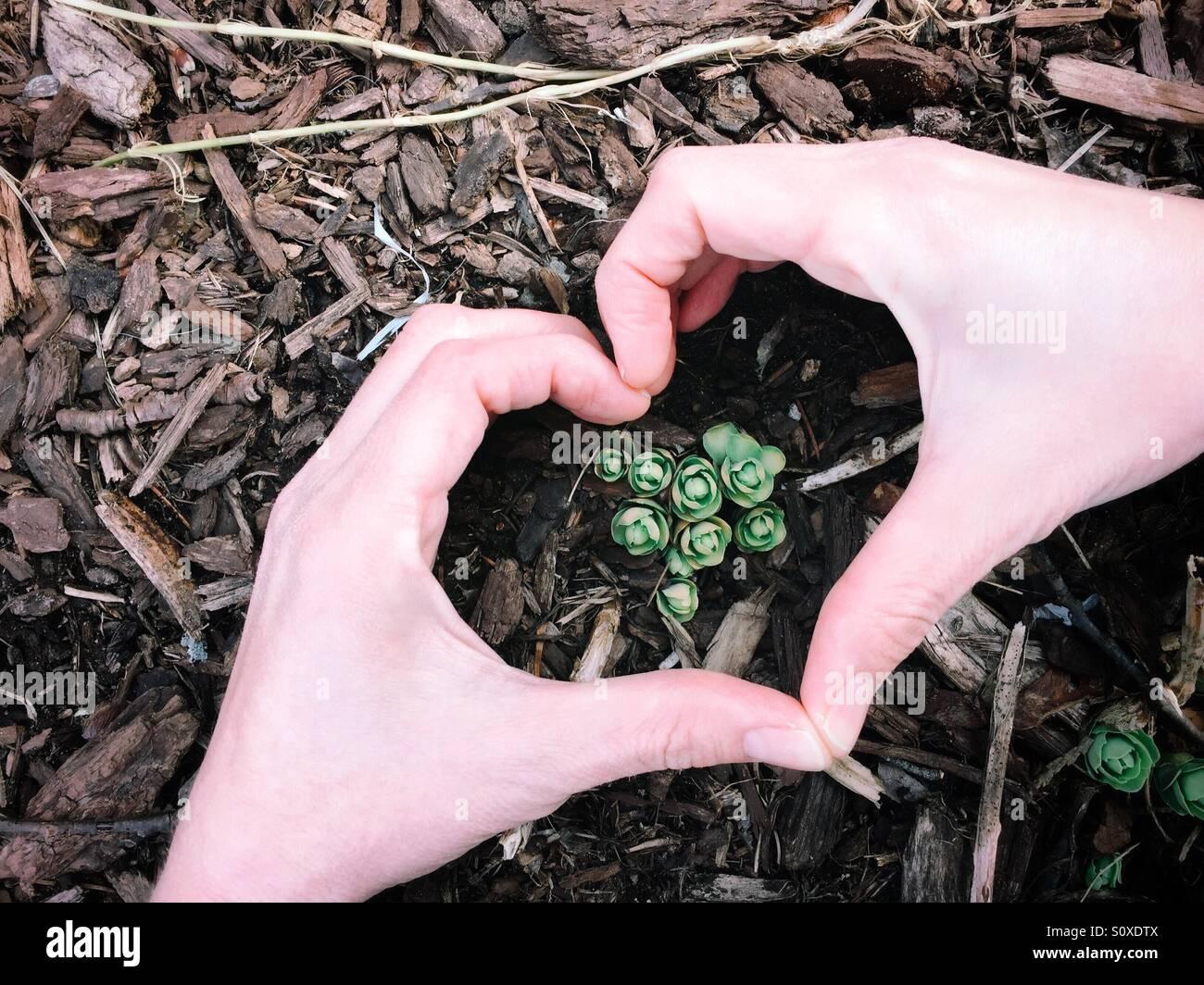 Ich liebe Frühling! Neues Wachstum erscheinen durch die Laubdecke nach einem langen Winter Pause. Stockbild