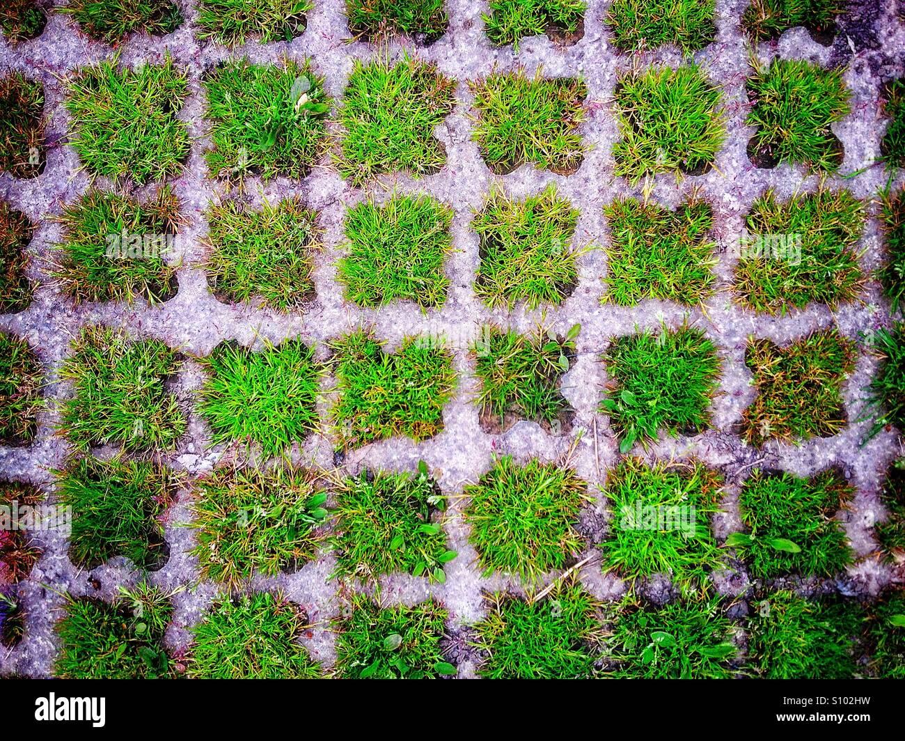 Grasbewachsenen Plätzen Stockbild