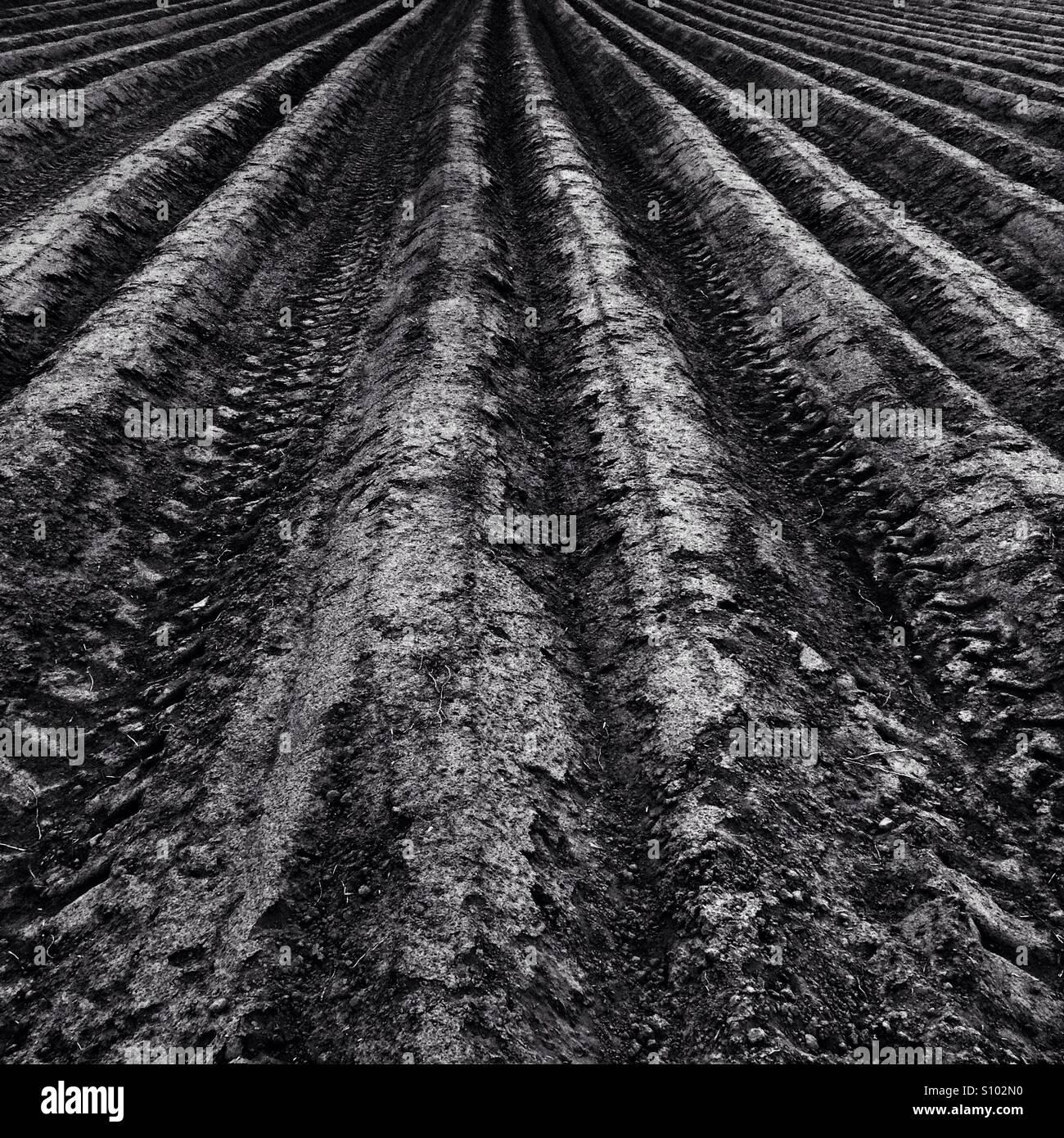 Feldlinien Stockbild