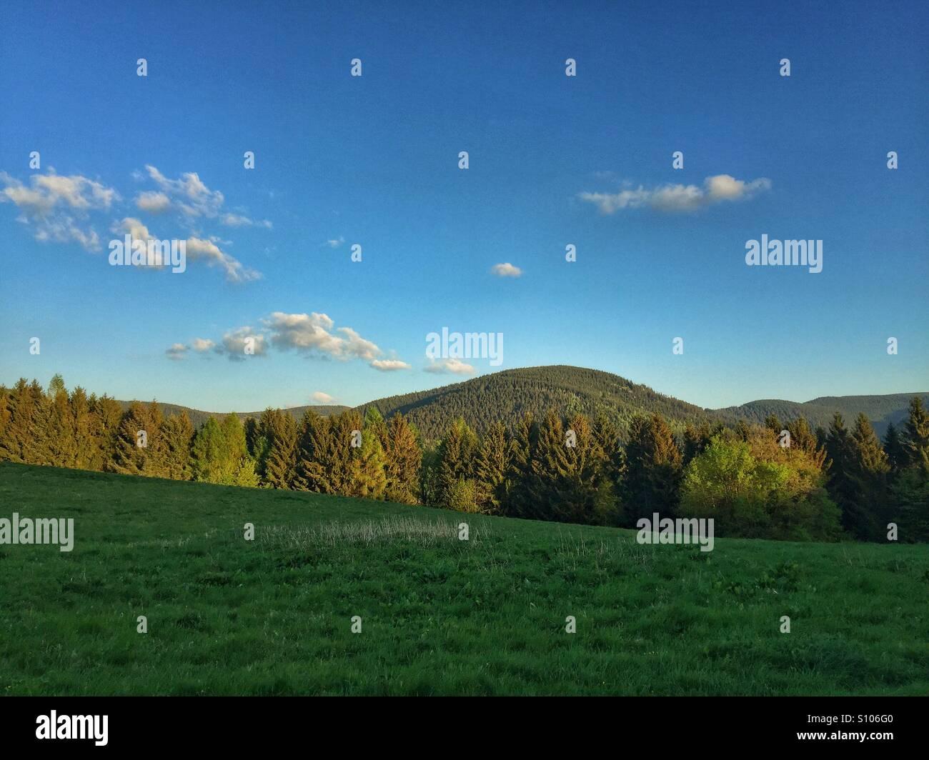 Ein Wunder der Natur. Stockbild