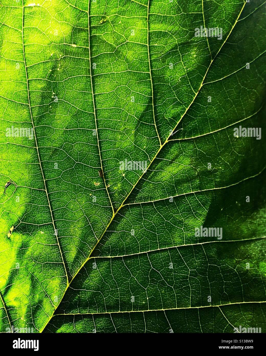 Nahaufnahme von einem grünen Blatt. Stockbild