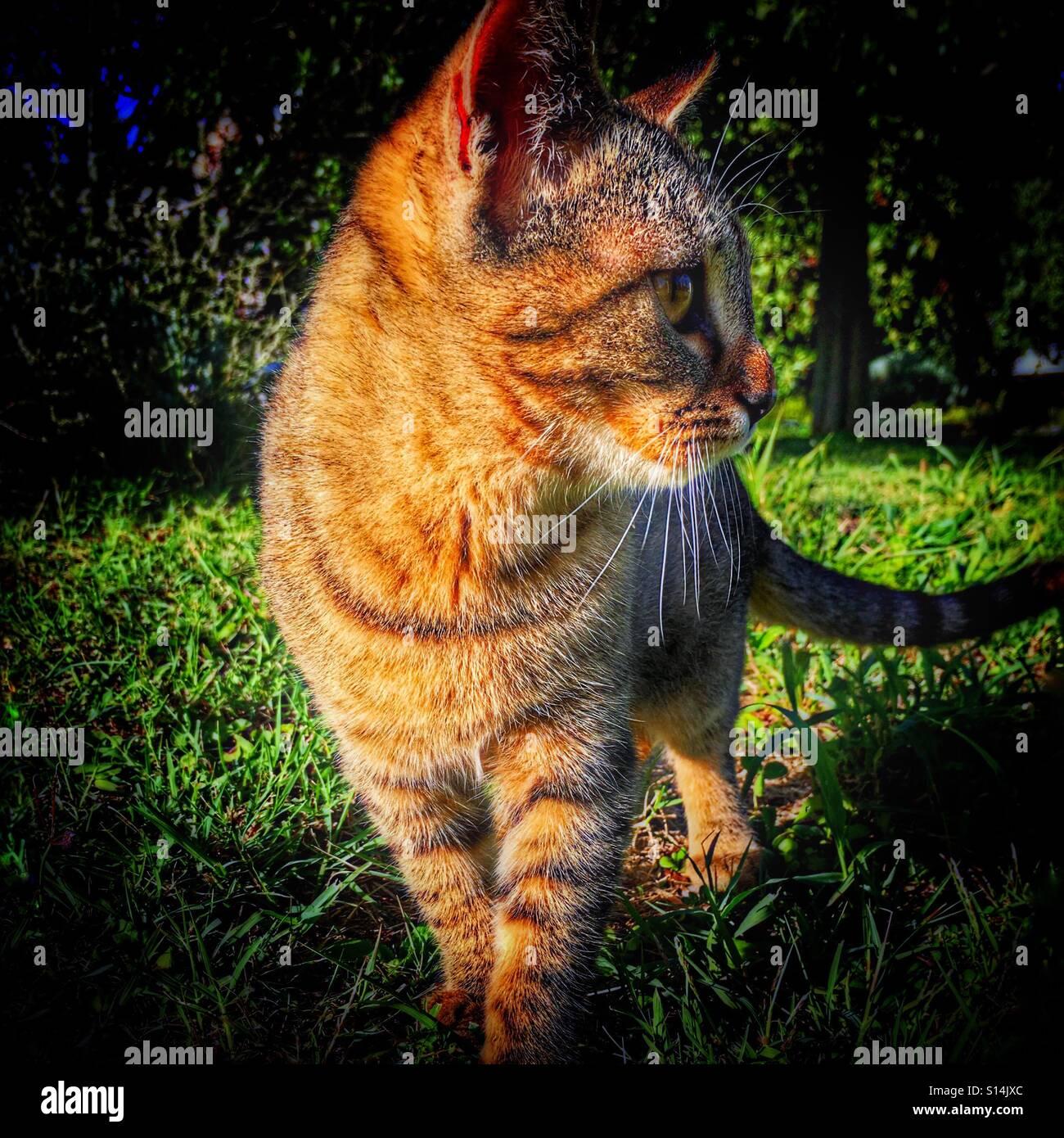 Katze im Seitenprofil Stockbild