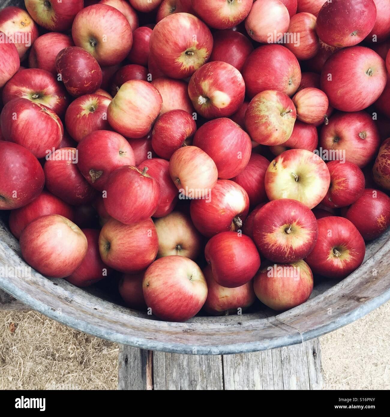 Eimer mit Äpfeln Stockbild