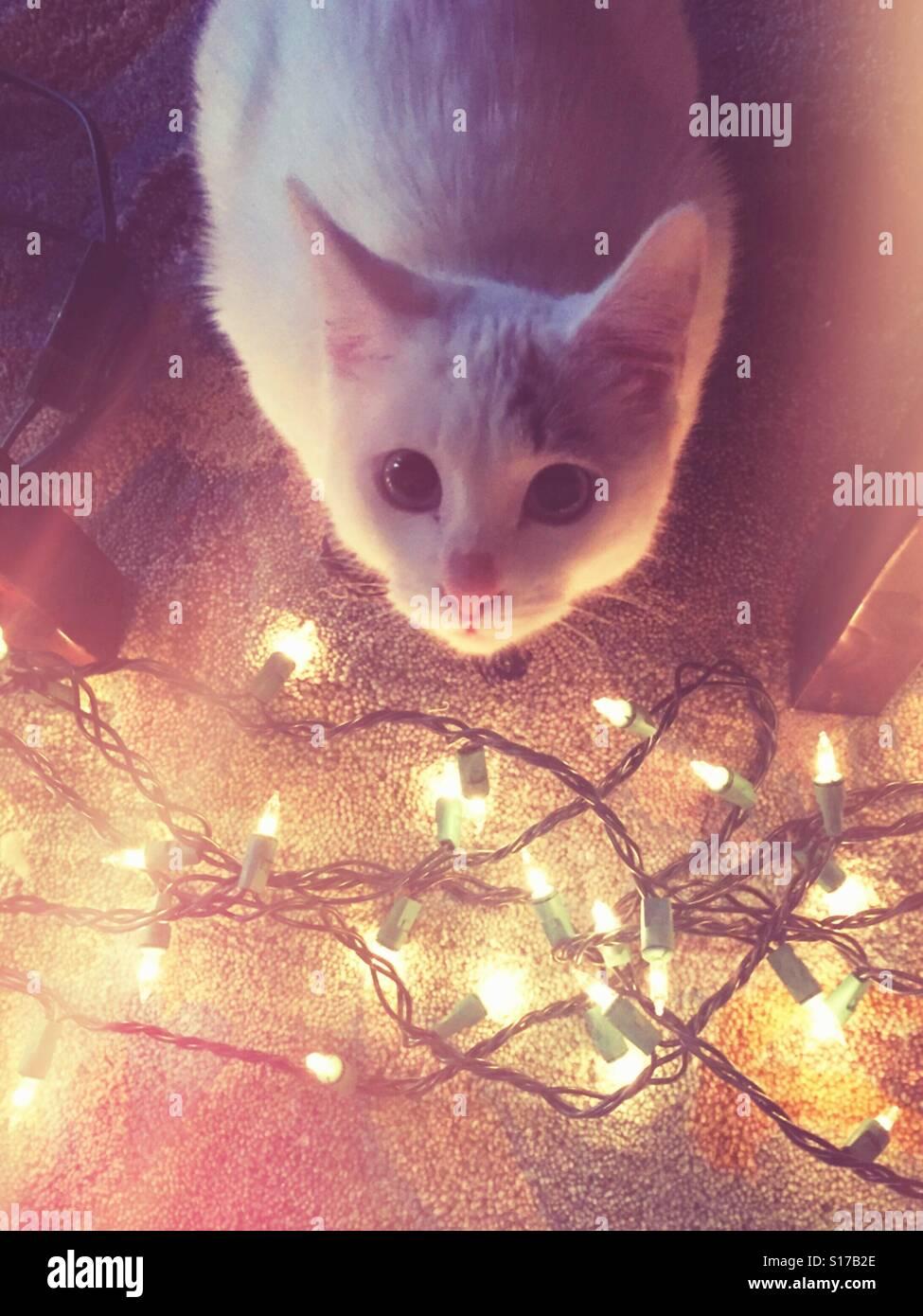 Niedlichen Kätzchen sitzt von funkelnden Weihnachtsbeleuchtung. Stockbild