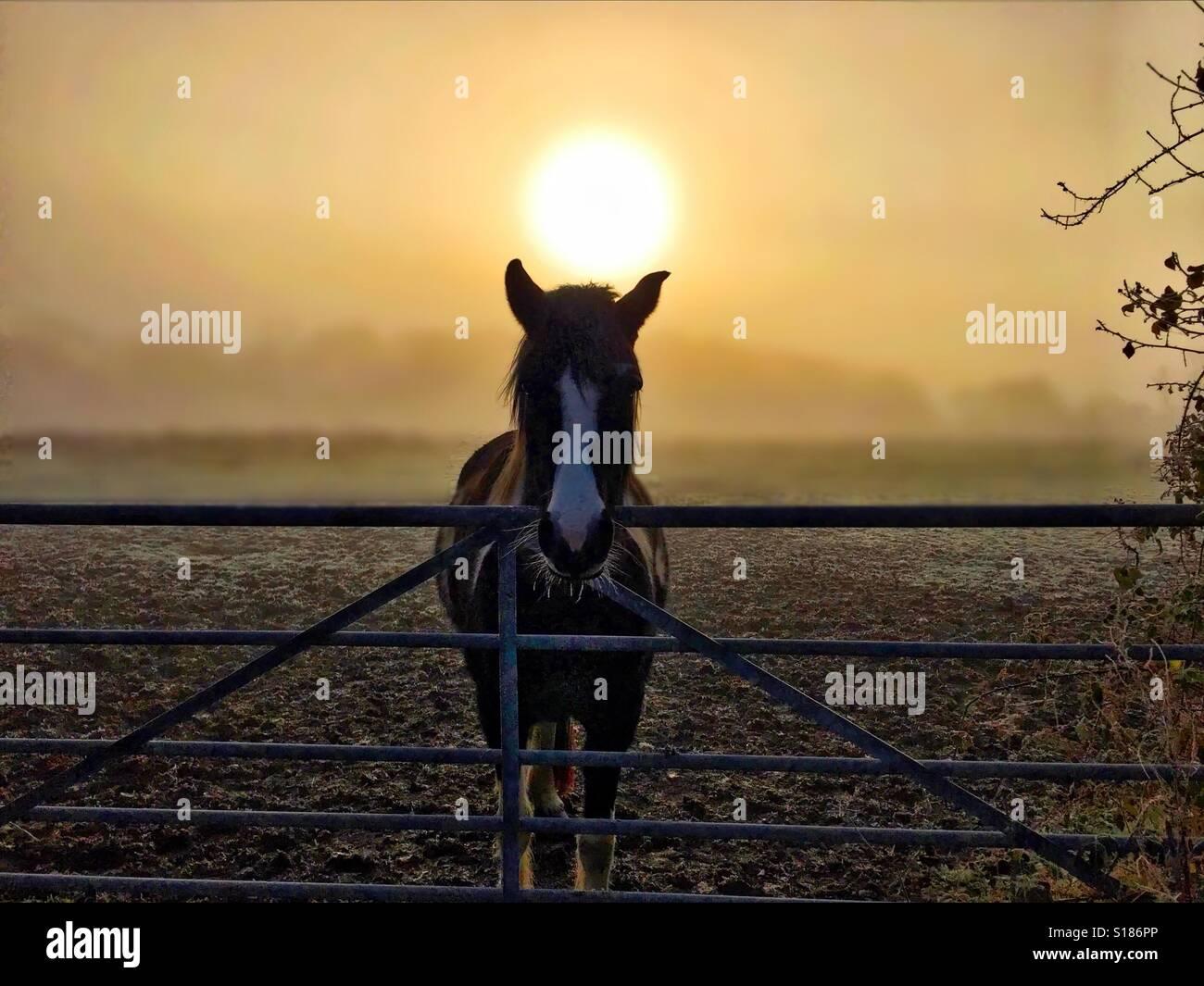 Pferd in die goldene Stunde Stockbild