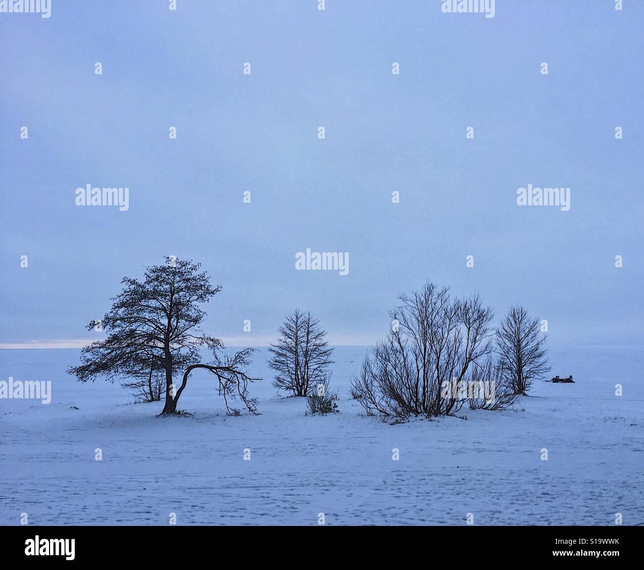 die ansicht der b ume im winter russland stockfoto bild 310619167 alamy. Black Bedroom Furniture Sets. Home Design Ideas