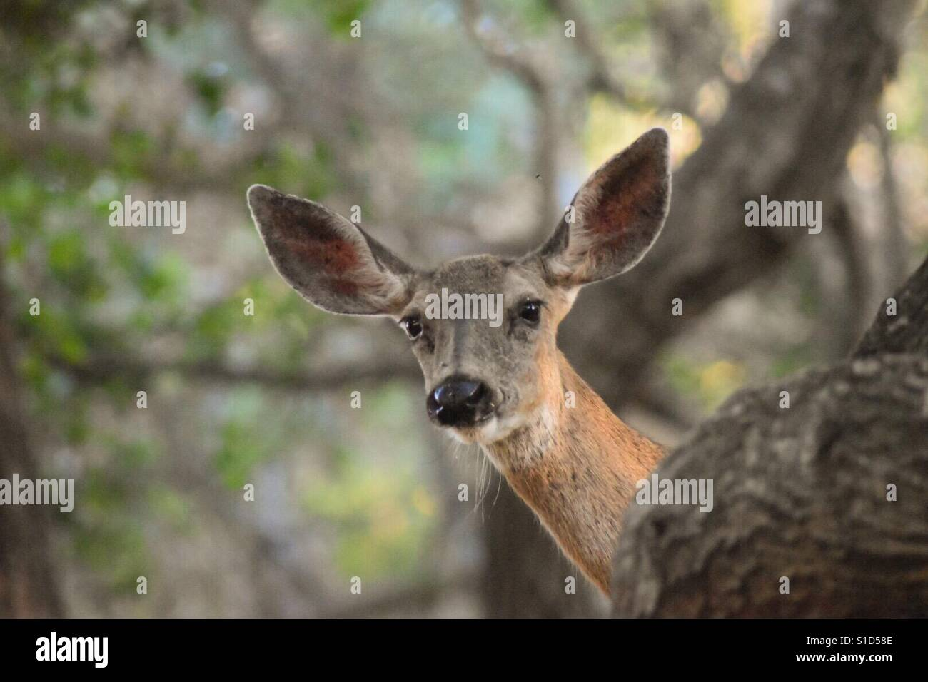 Oh Deer! Stockbild