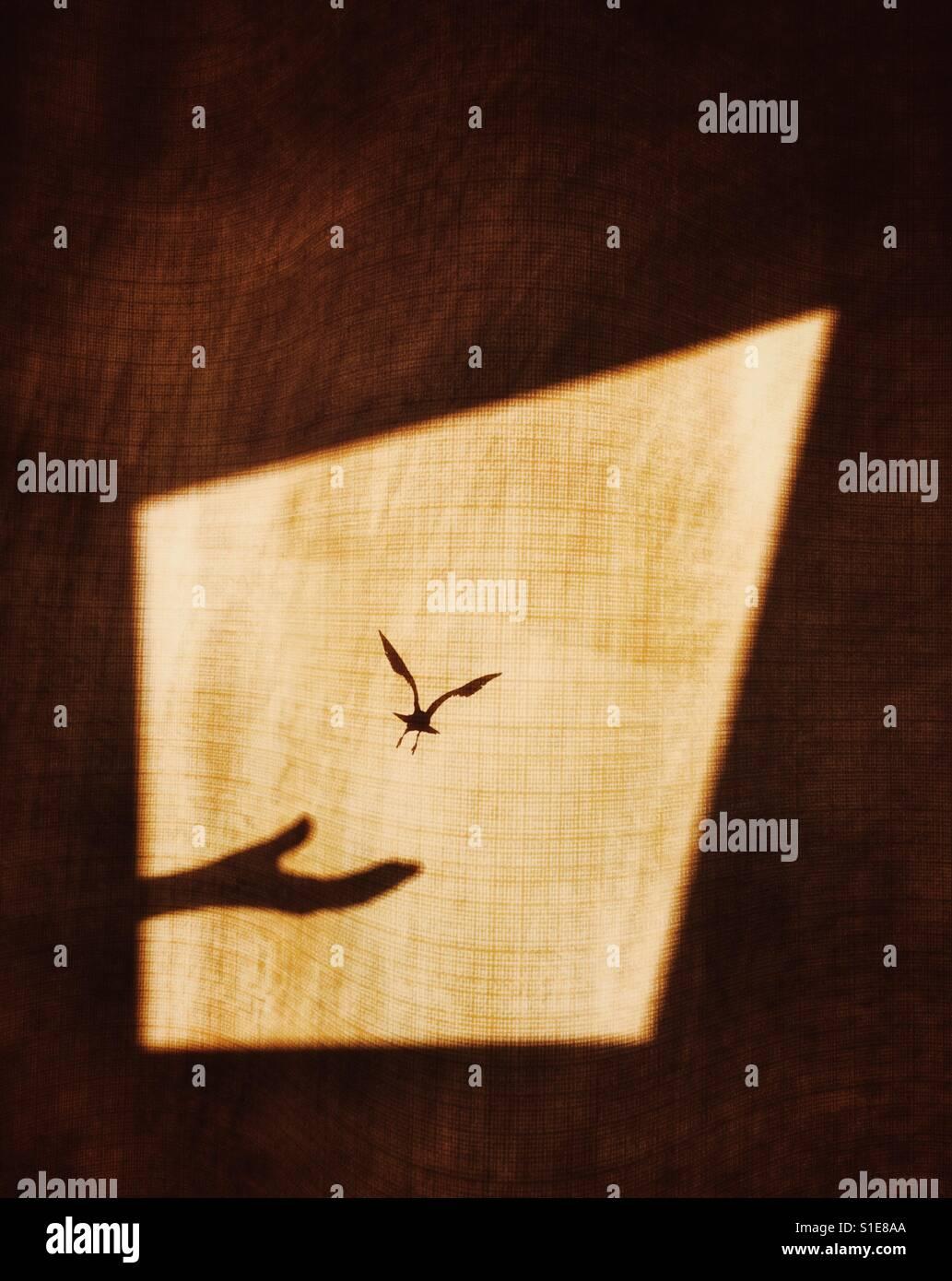 Schatten der Hand Realisierung Vogel auf einem Fenstervorhang, das Konzept der Flug für die Freiheit zu zeigen Stockbild