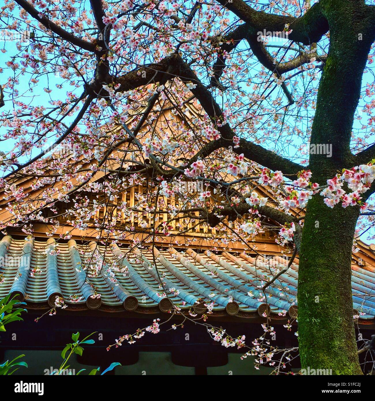 Pflaumenblüten und Tempel in japan Stockbild