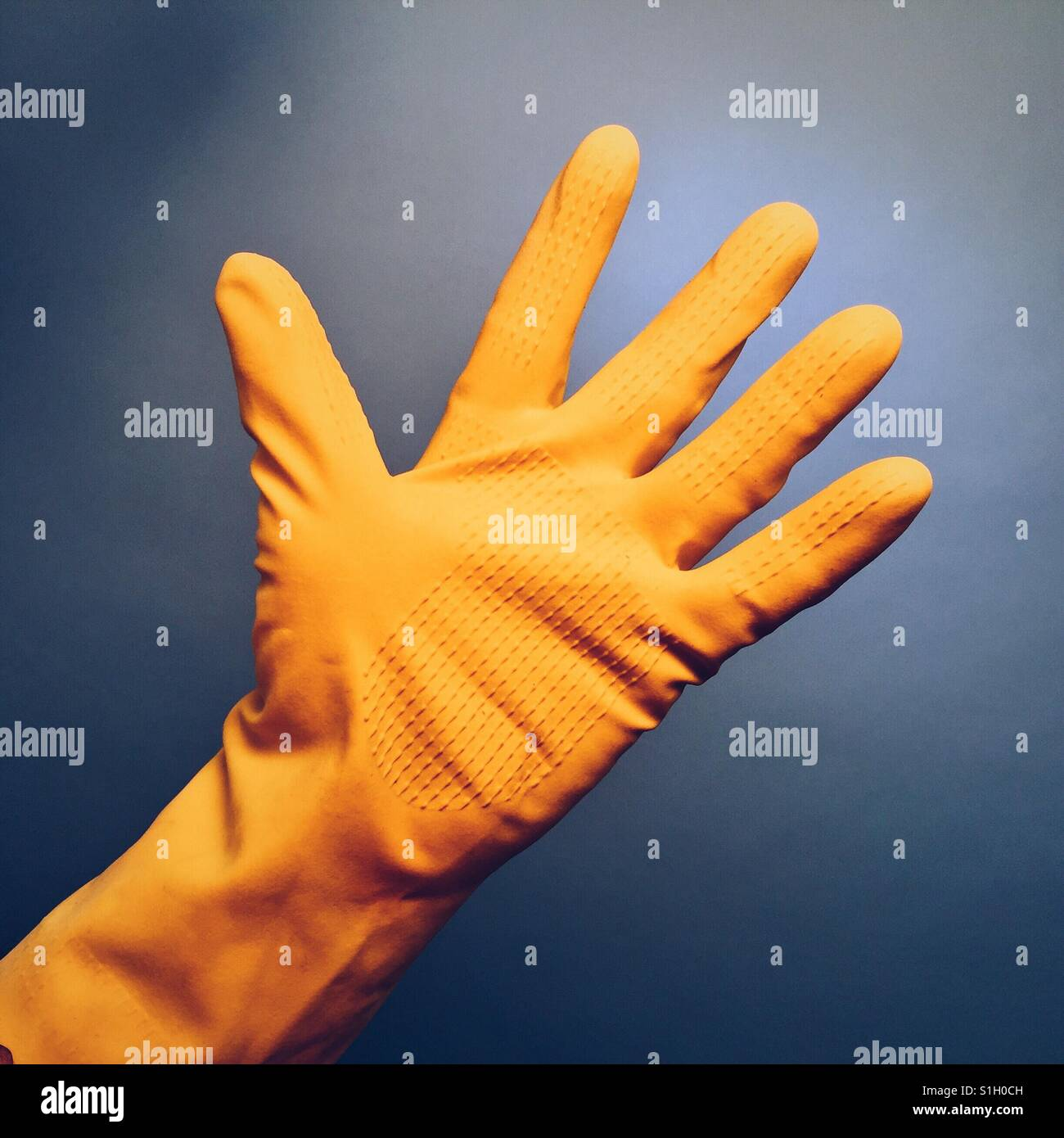 Die Hand eines Mannes in einem gelben Gummihandschuh auf blauem Grund Stockbild