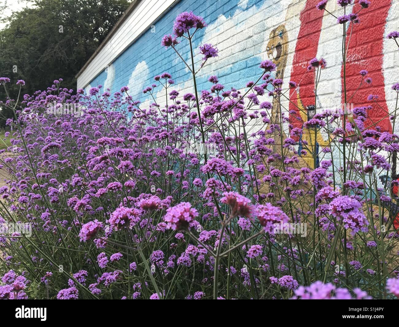 Verbena Mauve Stockfotos & Verbena Mauve Bilder - Alamy
