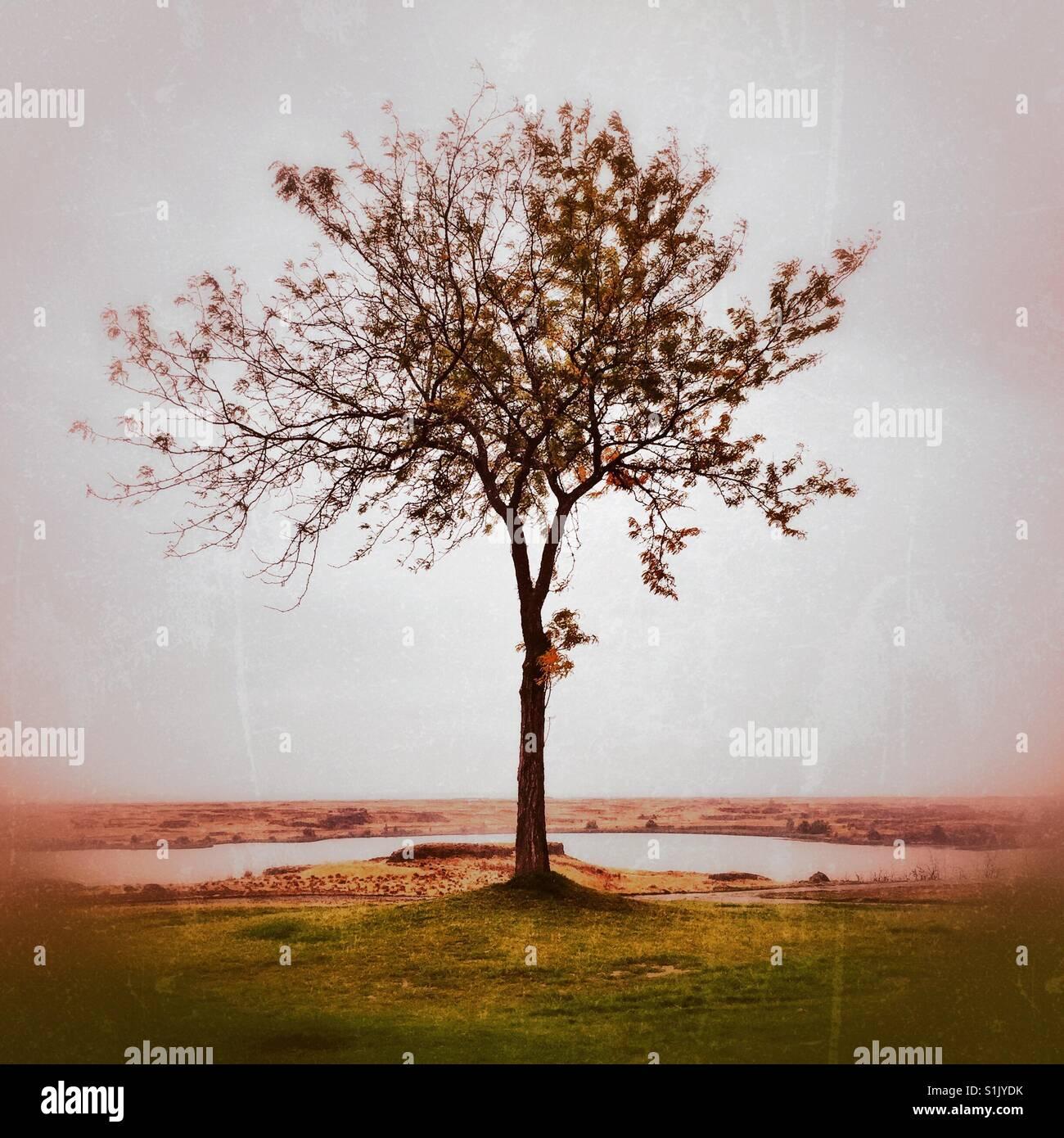 Ein einsamer Baum im Herbst Stockbild