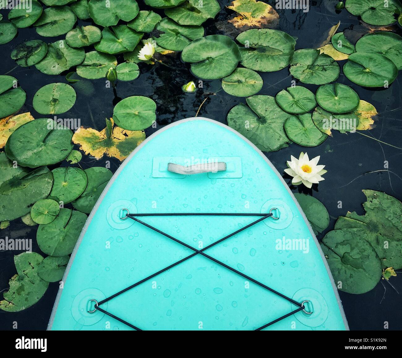 Paddle Board im Seerosenteich Stockbild