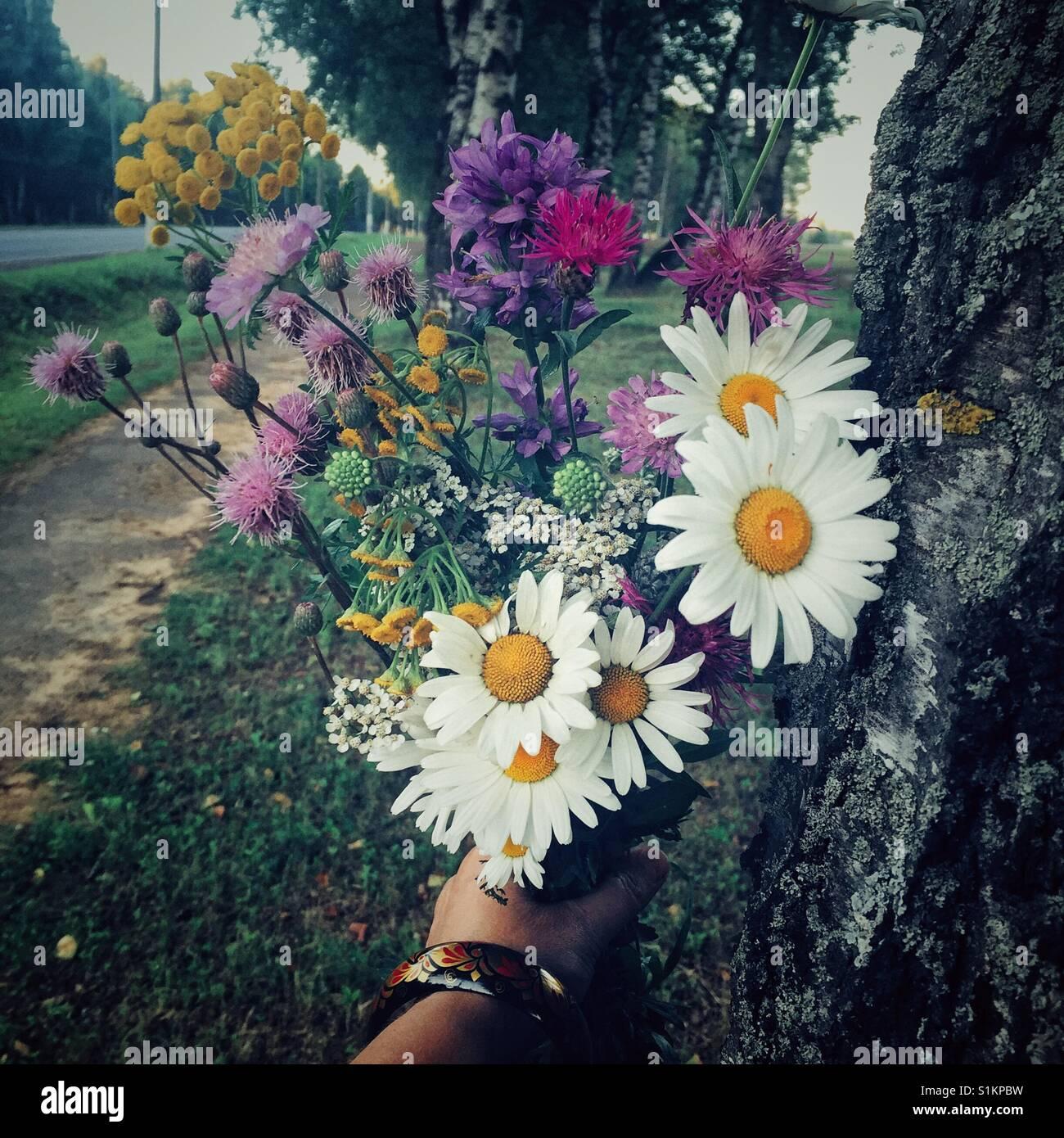 Wildblumen von Zentralrussland Stockbild