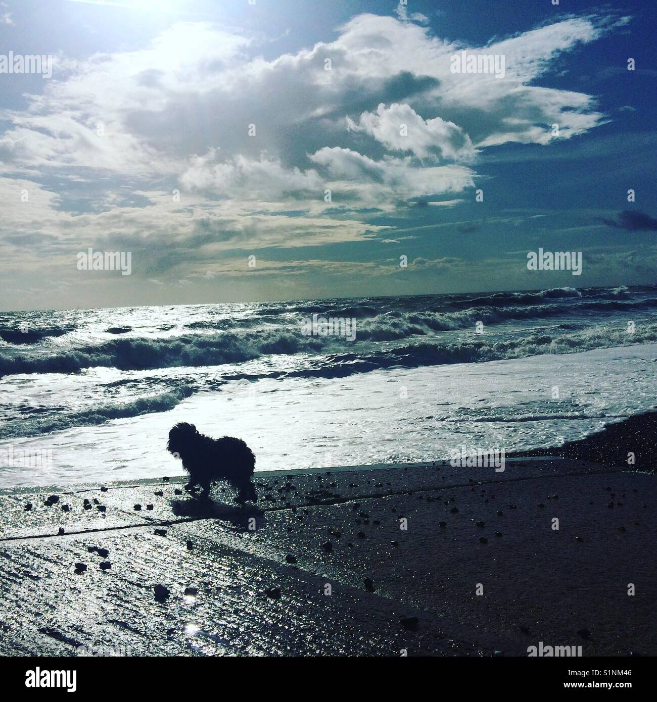 Blick aus Meer zu einer kleinen Hund das Universum und dank betrachtet, sehr lebendig Stockbild