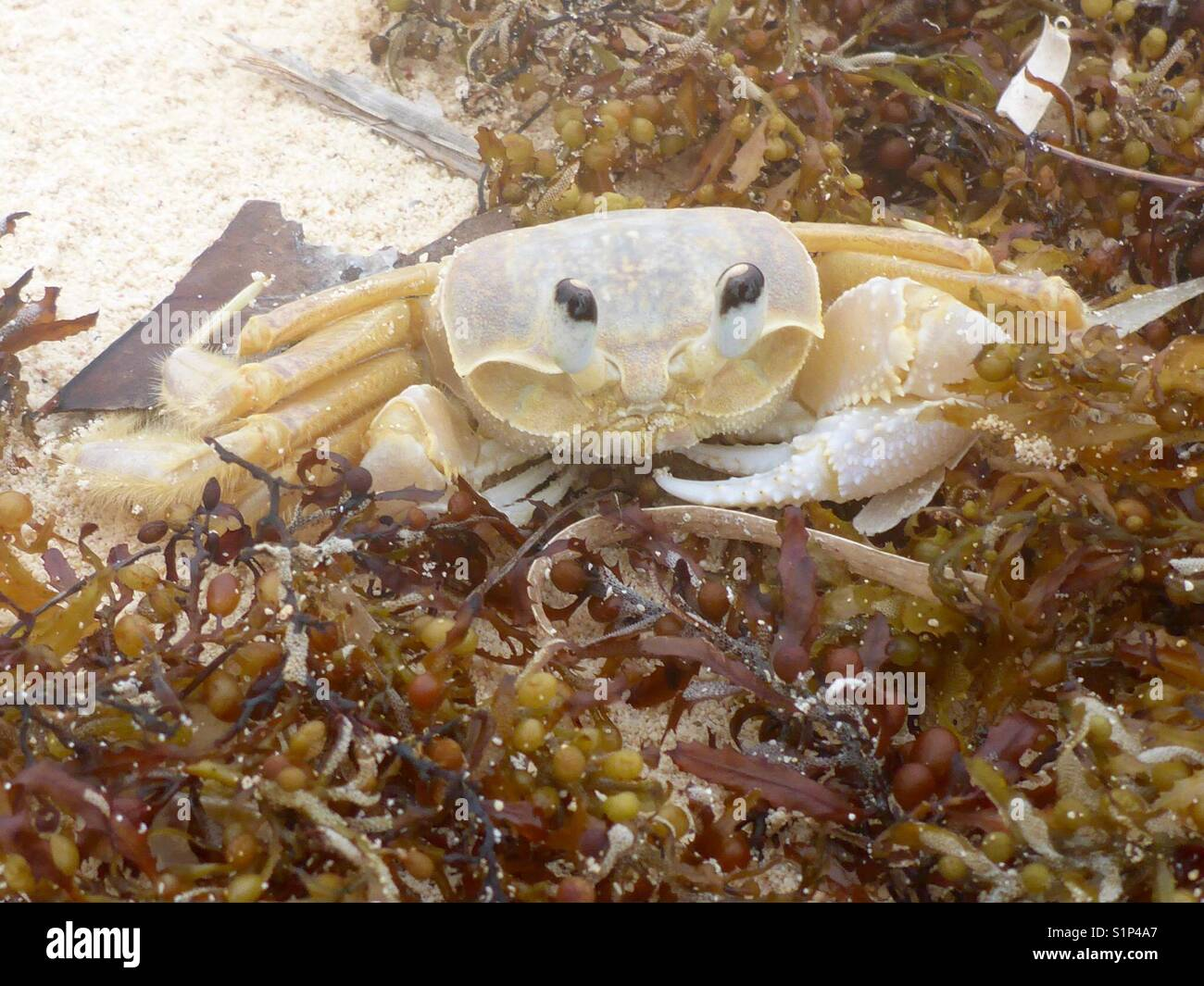 Krabben nach IRMA Stockbild