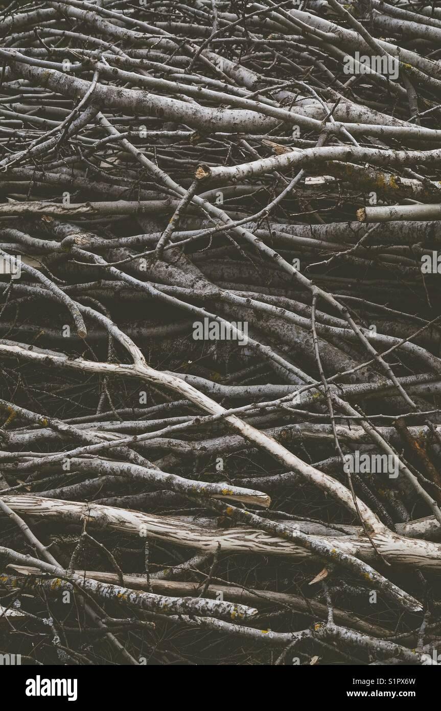 Schneiden Sie Äste. Texturierte, abstrakte Fotografie. Stockbild